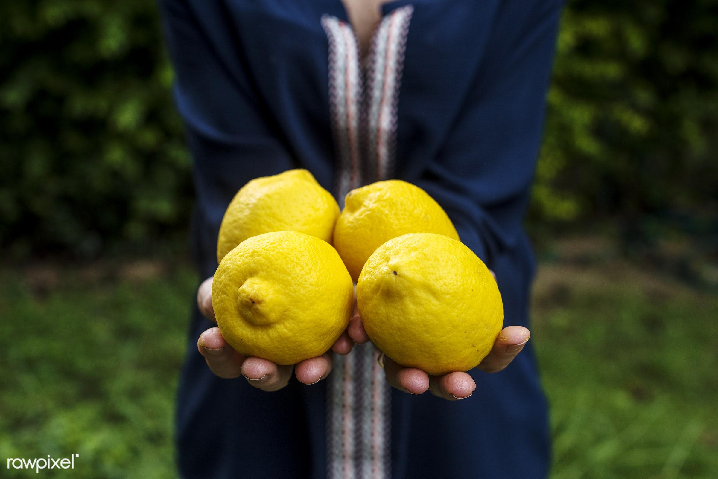 raw, holding, farm, nature, hands, fresh, closeup, fruit, organic, healthy, harvest, lemon, produce