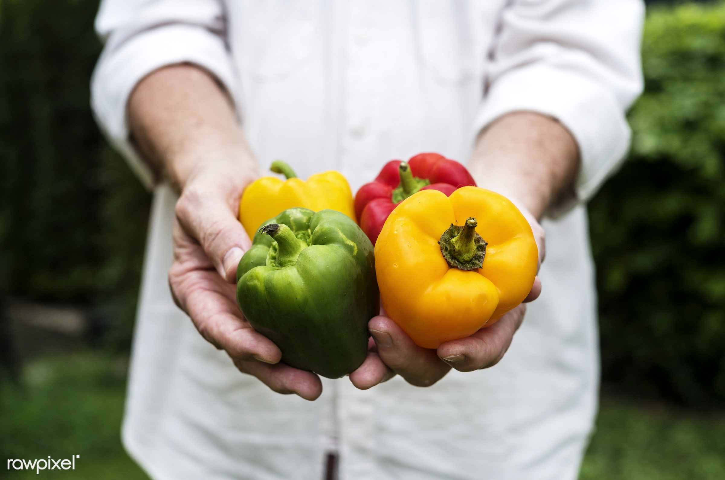 holding, bell pepper, paprika, nature, hands, fresh, ingredient, closeup, organic, food, healthy, harvest, produce