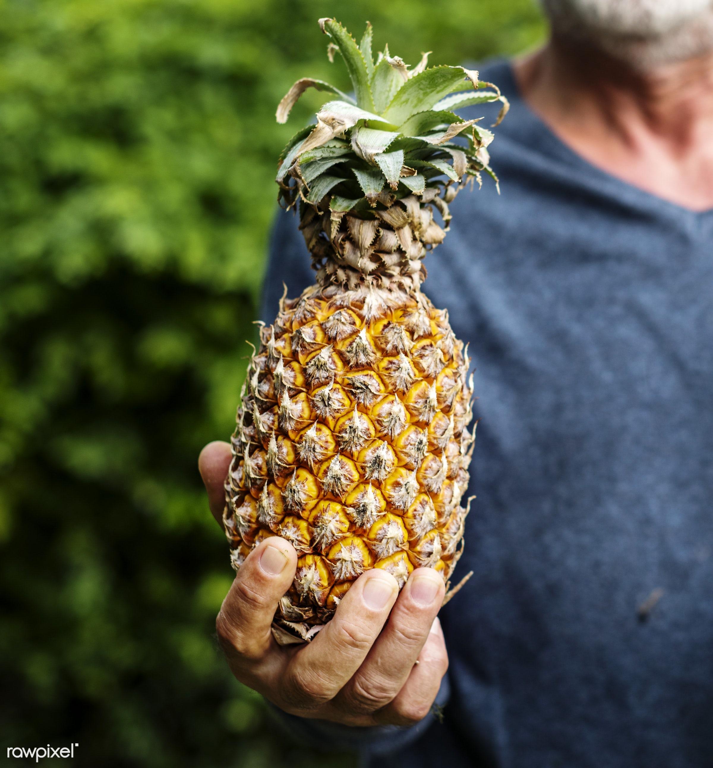 raw, holding, farm, nature, hands, fresh, closeup, fruit, organic, healthy, harvest, pineapple, produce