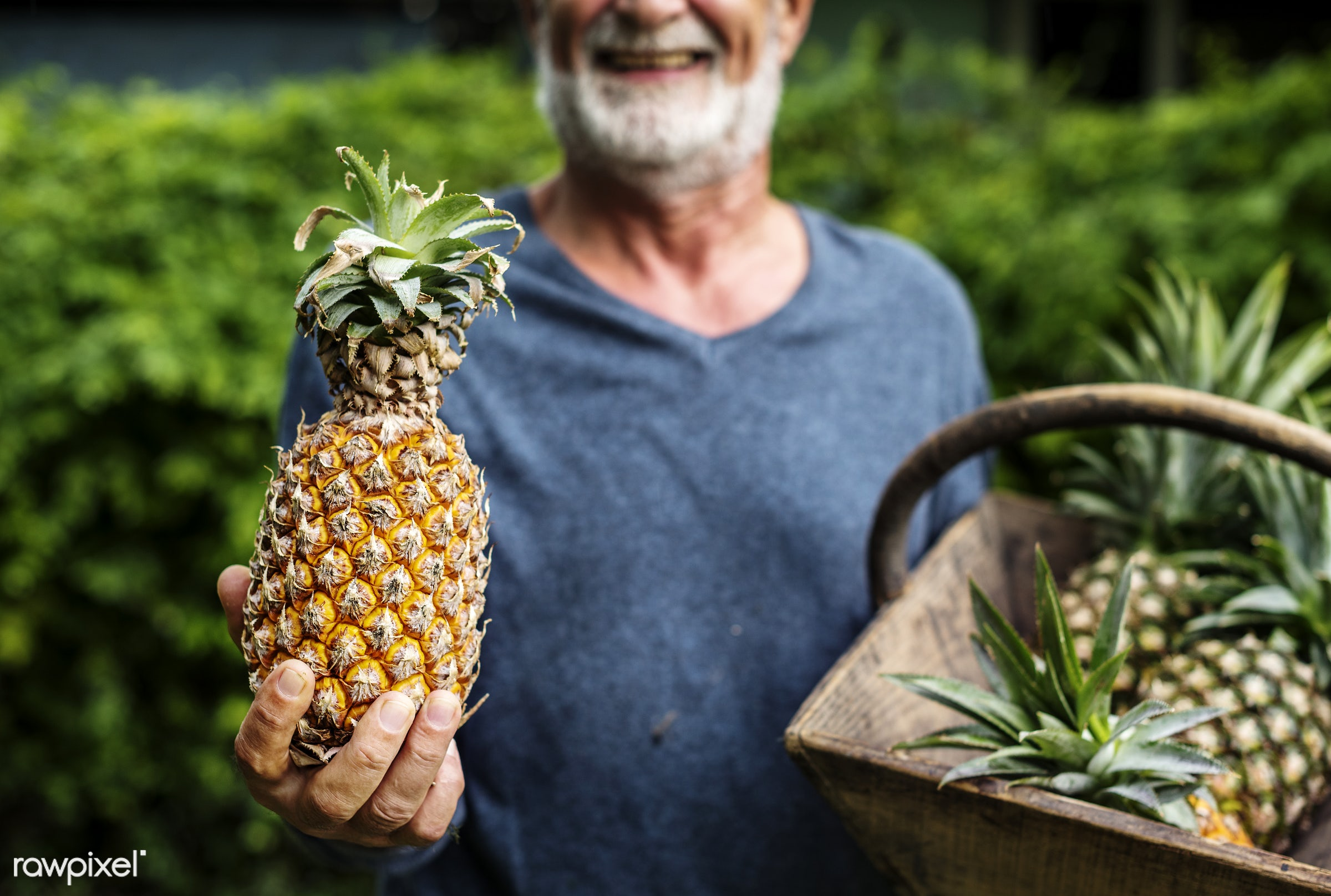 raw, holding, farm, nature, hands, fresh, closeup, man, fruit, organic, basket, healthy, harvest, pineapple, produce