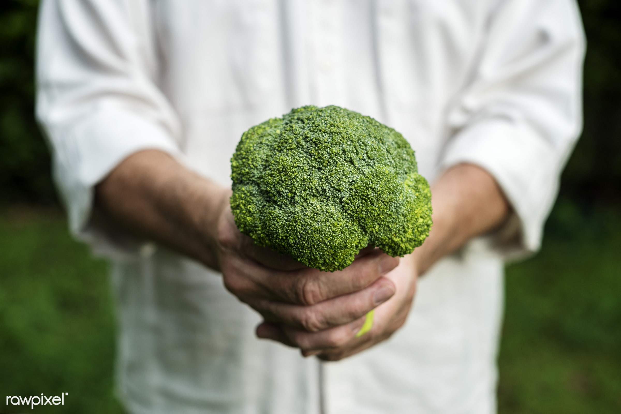 raw, holding, farm, nature, hands, fresh, broccoli, veggie, closeup, picking, organic, healthy, harvest, vegetable, produce