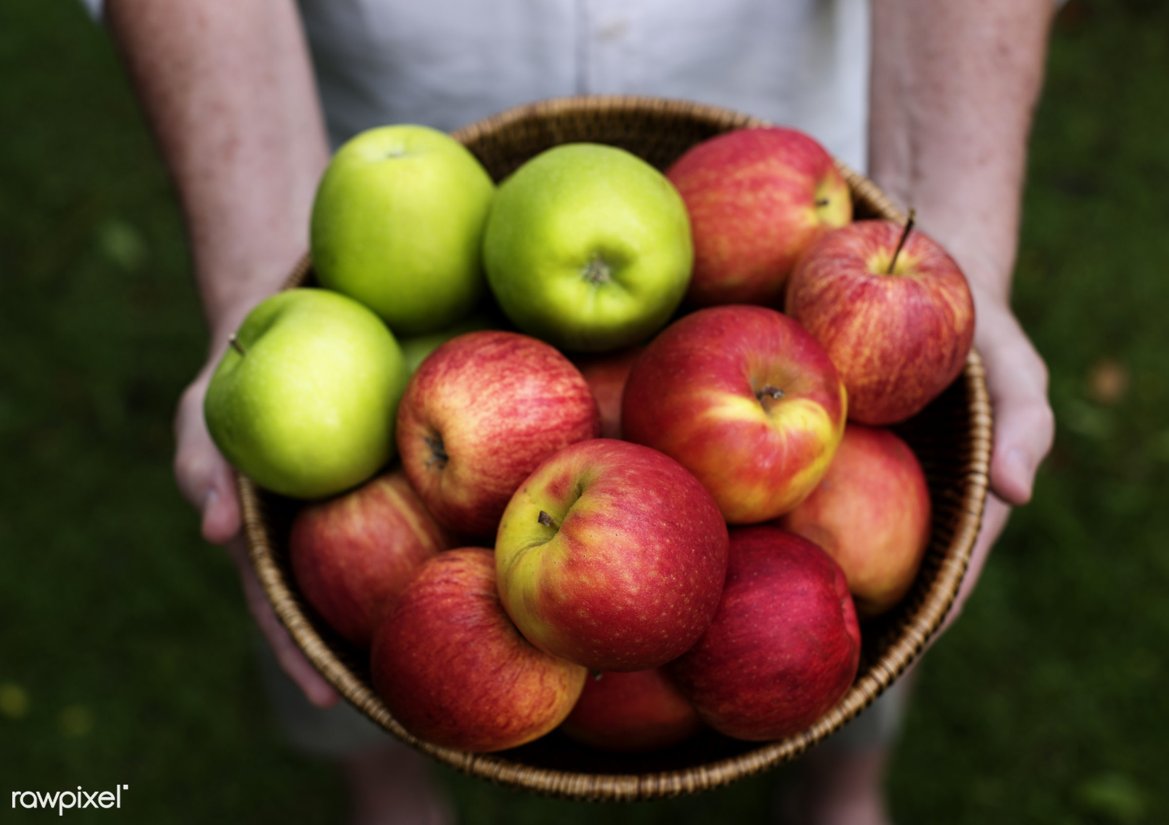 raw, red apple, holding, farm, nature, hands, fresh, apples, closeup, fruits, organic, healthy, green apple, harvest, produce
