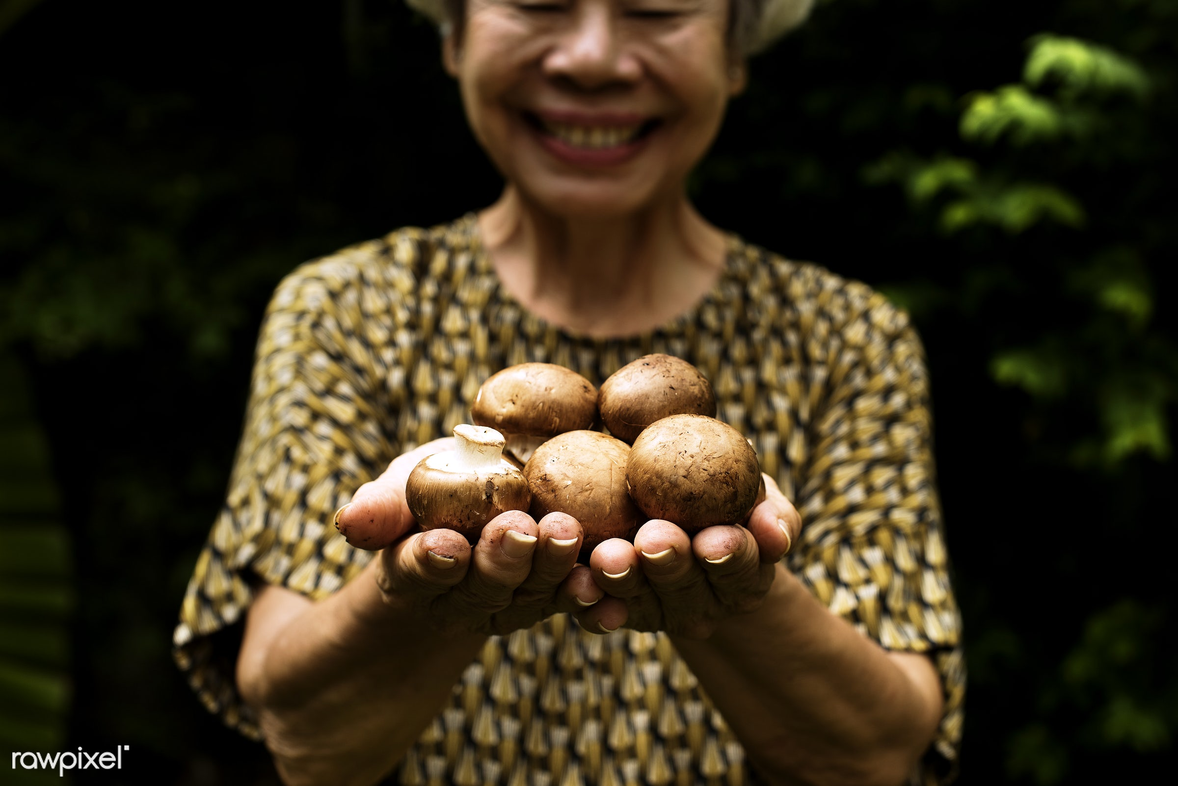 mushroom, plant, raw, cuisine, people, crop, hands, fresh, woman, pick, cultivation, ingredient, agriculture, farming,...
