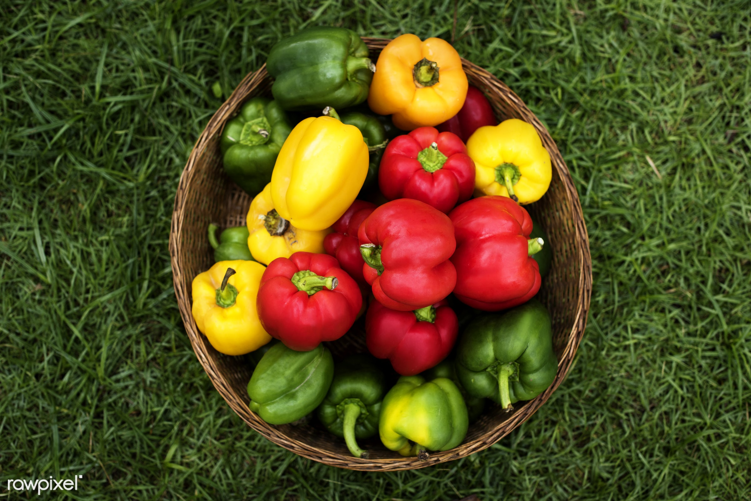 different, raw, holding, bucket, bell pepper, fiber, kind, nature, fresh, hands, ingredient, closeup, culinary, veggies,...