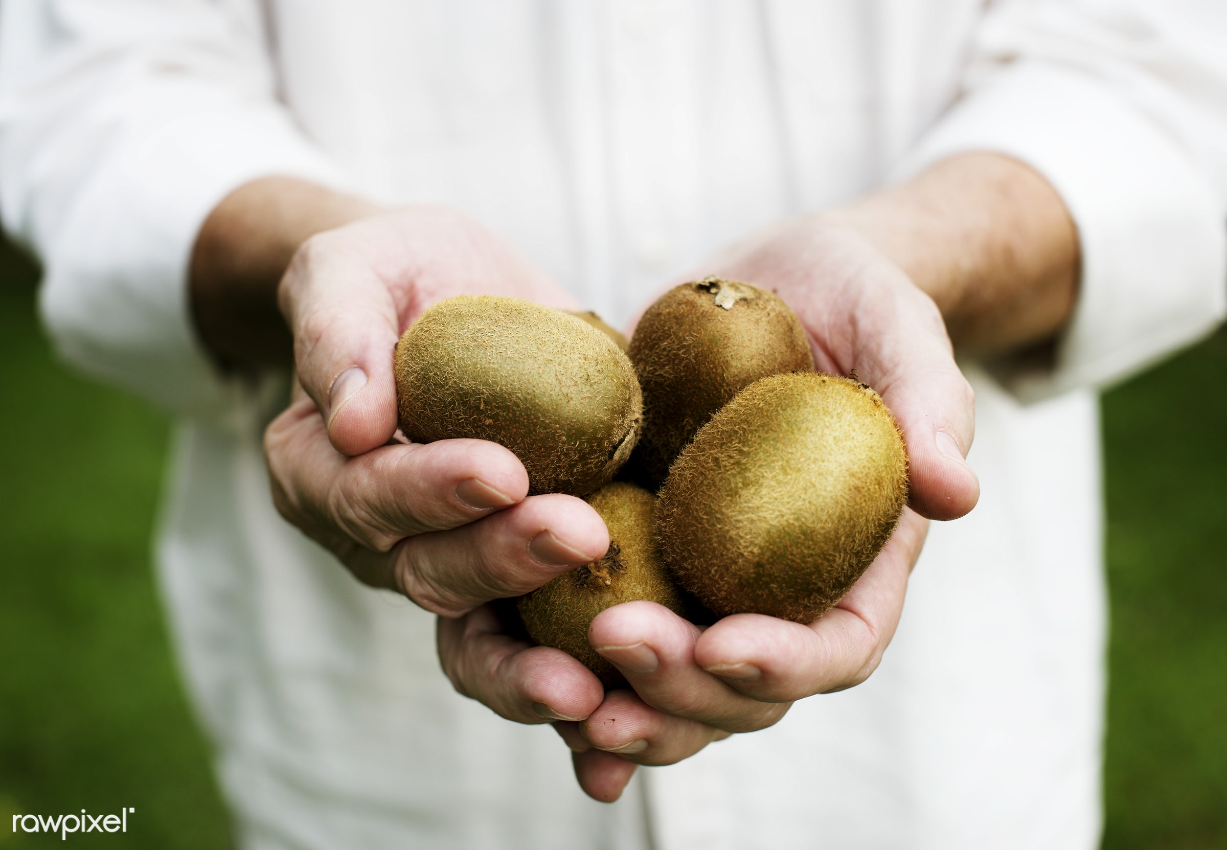raw, holding, farm, nature, hands, fresh, kiwi, closeup, fruit, organic, healthy, harvest, produce