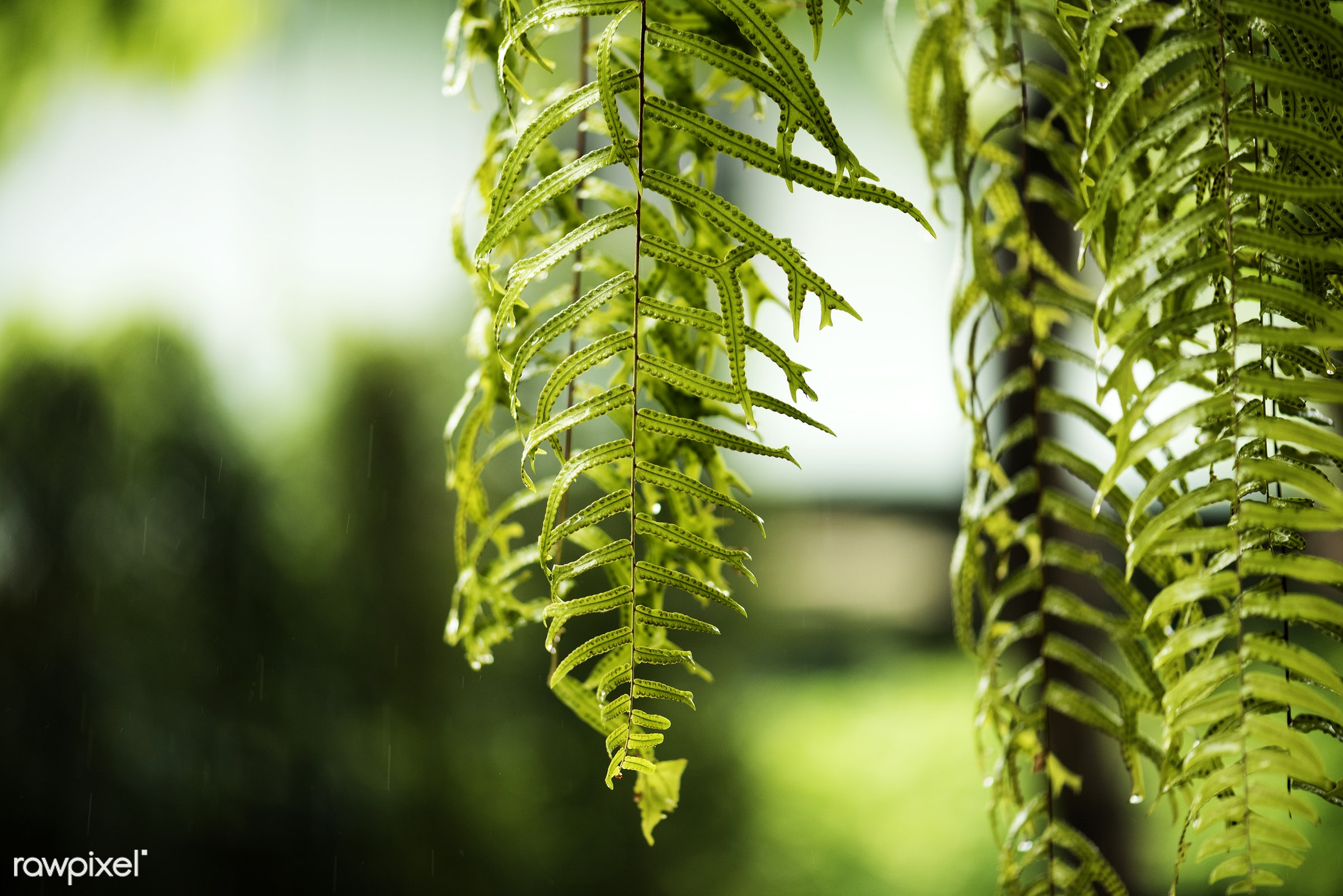 botany, green, plate, leaves, fern, real, nature, fresh, textured, natural, closeup