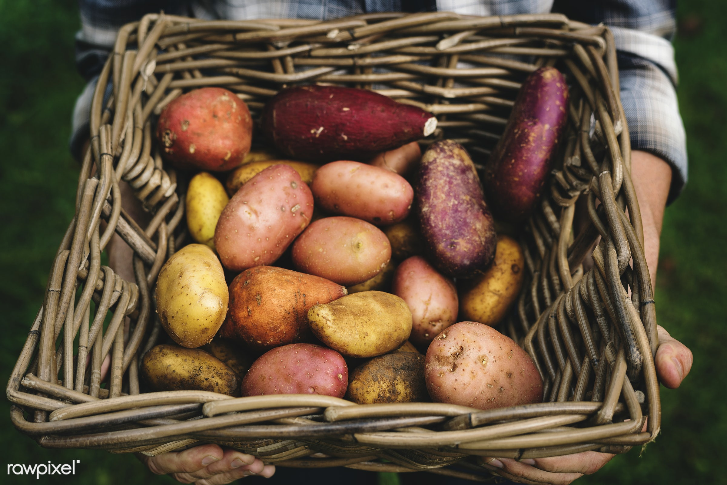raw, potatoes, agriculture, sweet potato, product, real, organic, nature, fresh, various, vegetable, dirt, wooden basket,...