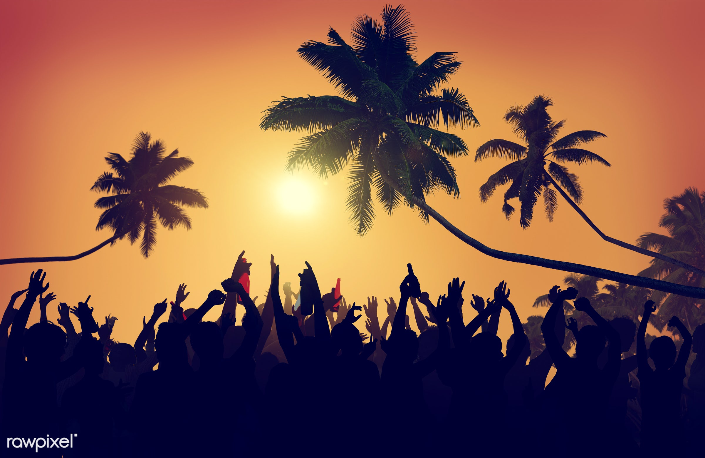 adolescence, audience, back lit, beach party, carefree, celebration, cheerful, coconut palm tree, communication, community,...