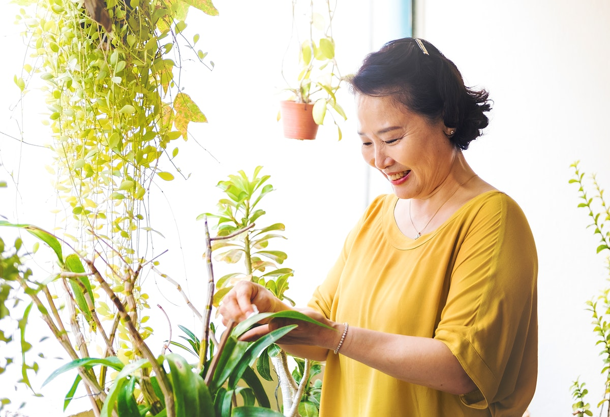 Asian woman hands wiping houseplants leaves