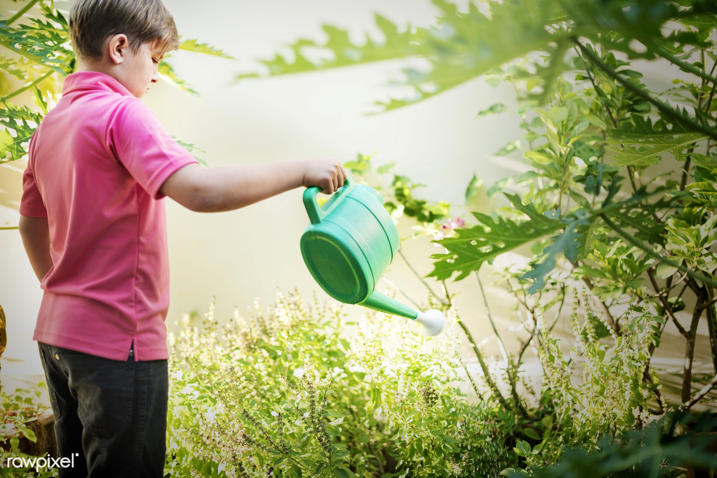alone, boy, cheerful, home, house, nature, one, plants, tree, water, watering, young, youth