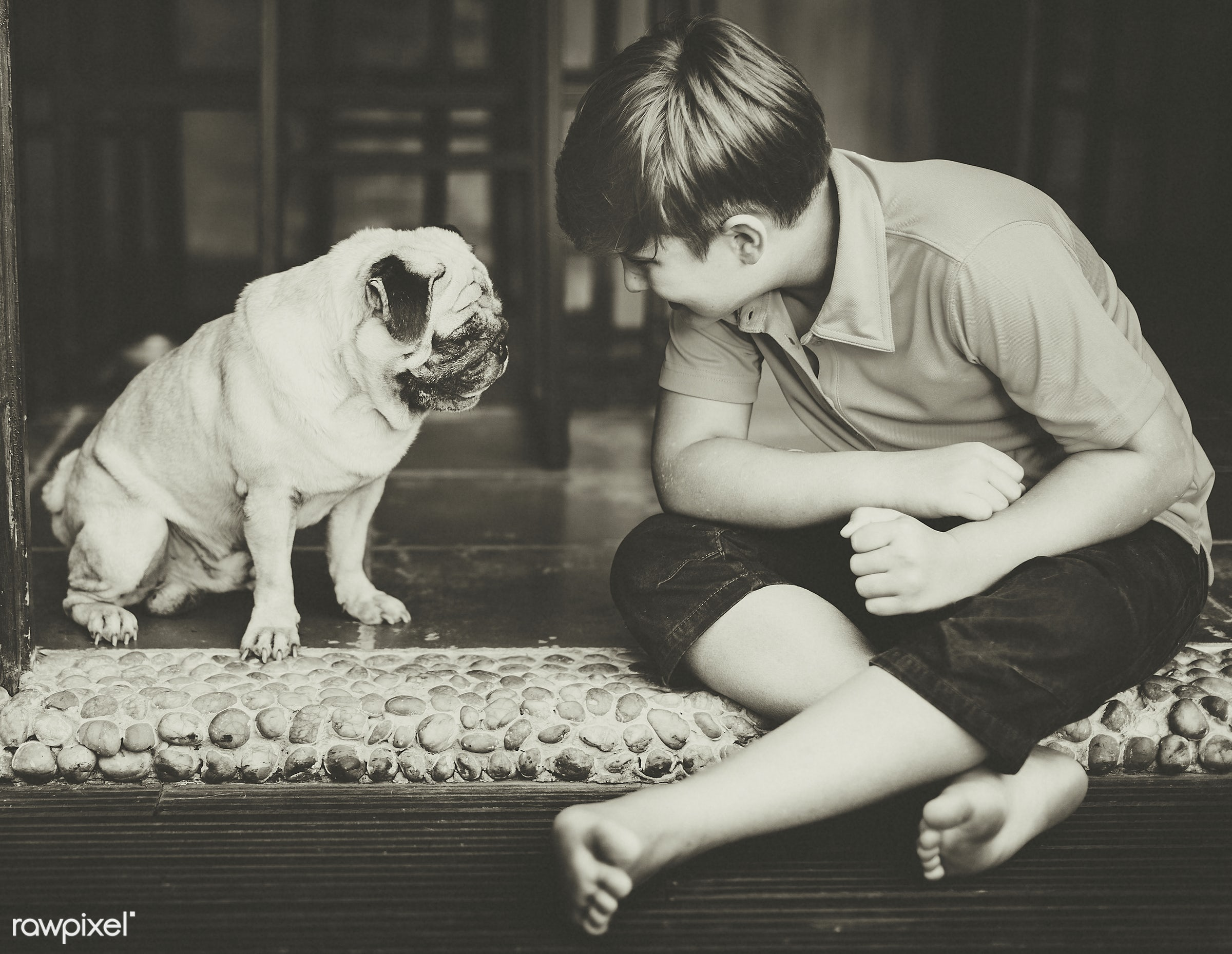 alone, animal, boy, caucasian, cheerful, child, dog, friends, friendship, happiness, home, house, kid, mammal, pet, playful...