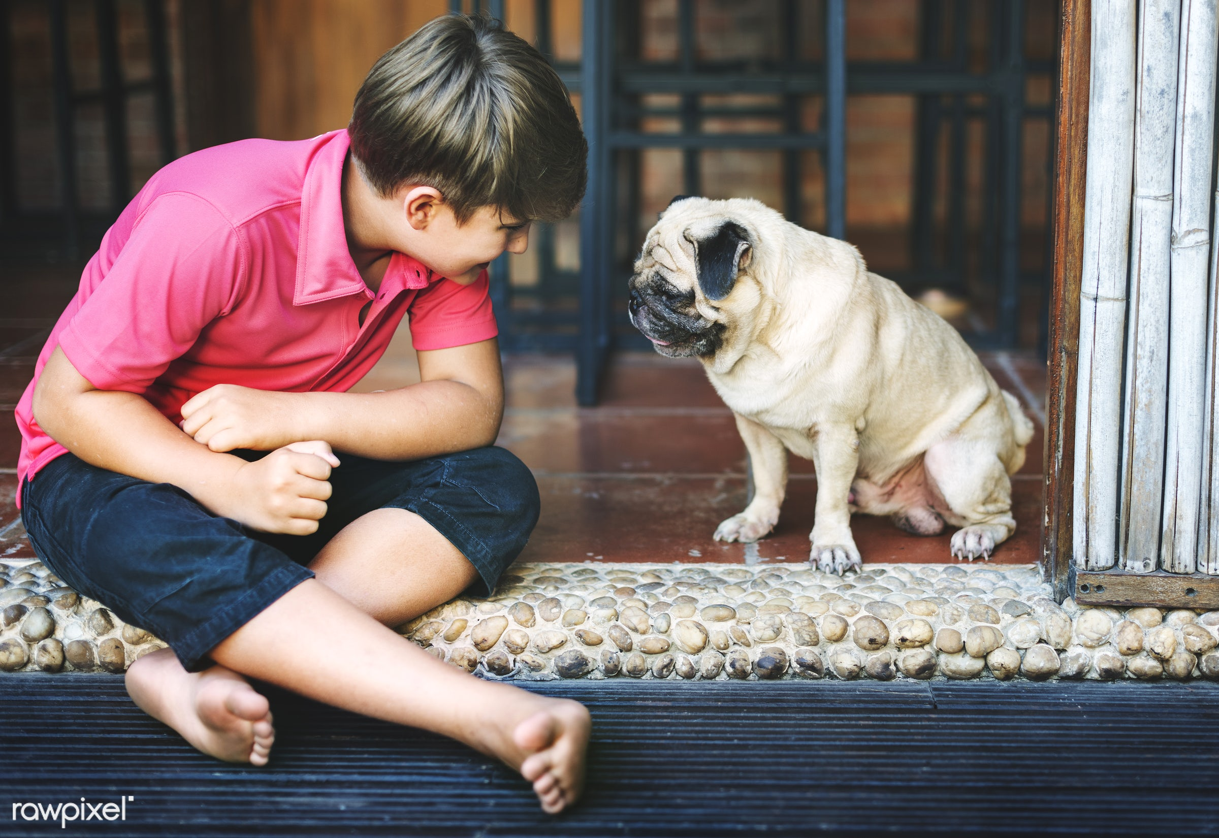Daily lifestyle of caucasian family shoot - pet, alone, animal, boy, cheerful, child, dog, friends, friendship, happiness,...