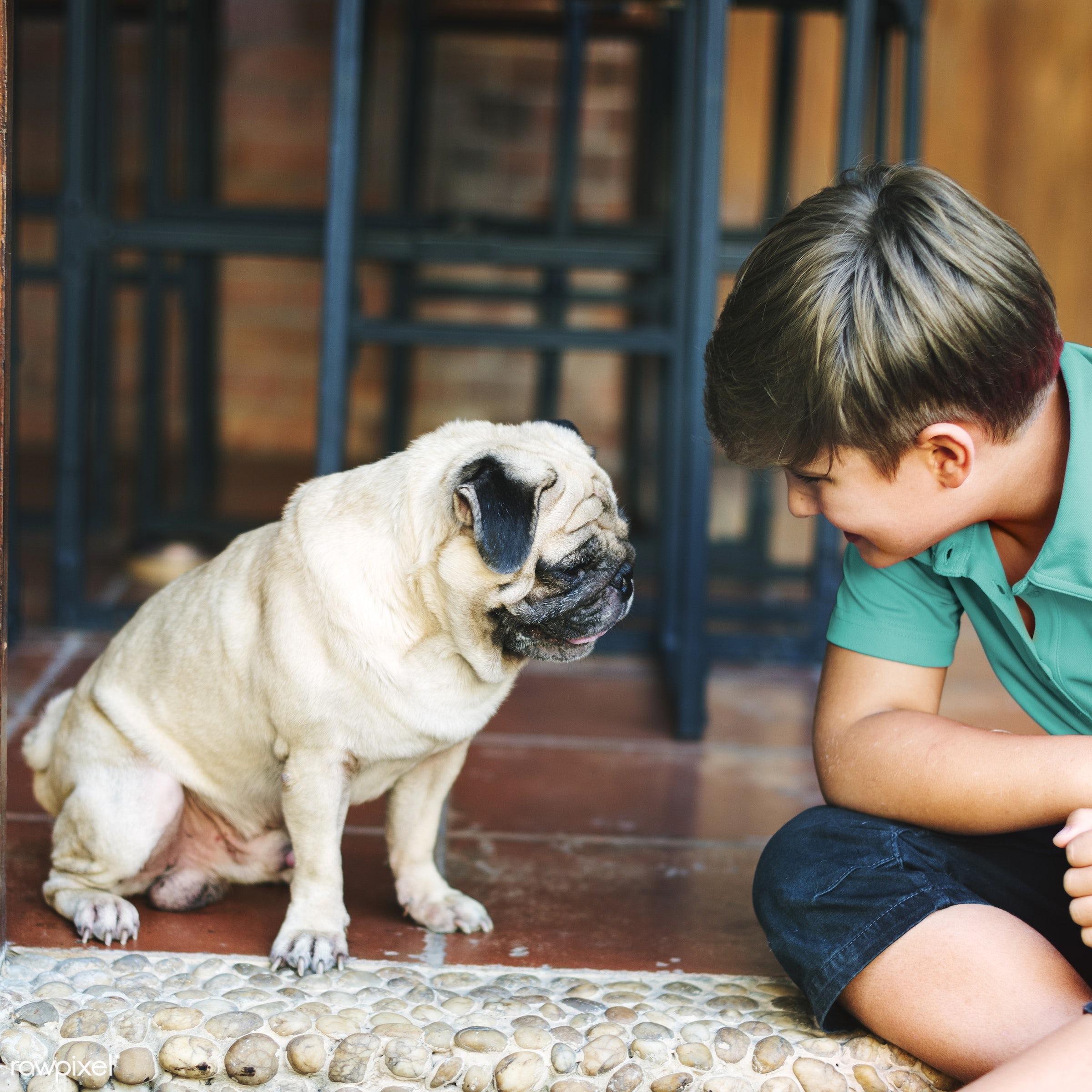 alone, animal, boy, caucasian, cheerful, child, dog, friends, friendship, happiness, home, house, kid, mammal, pet, playful...