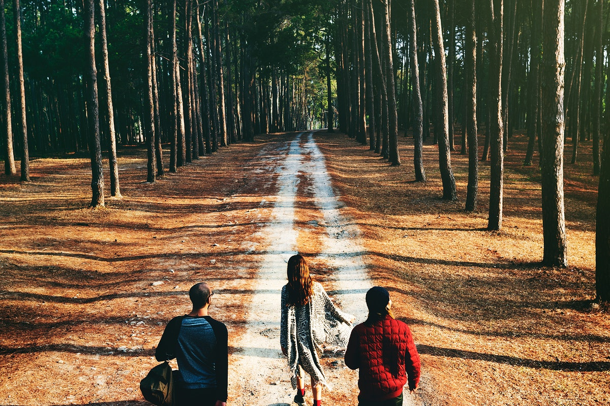 Group of friends travel in the forest together