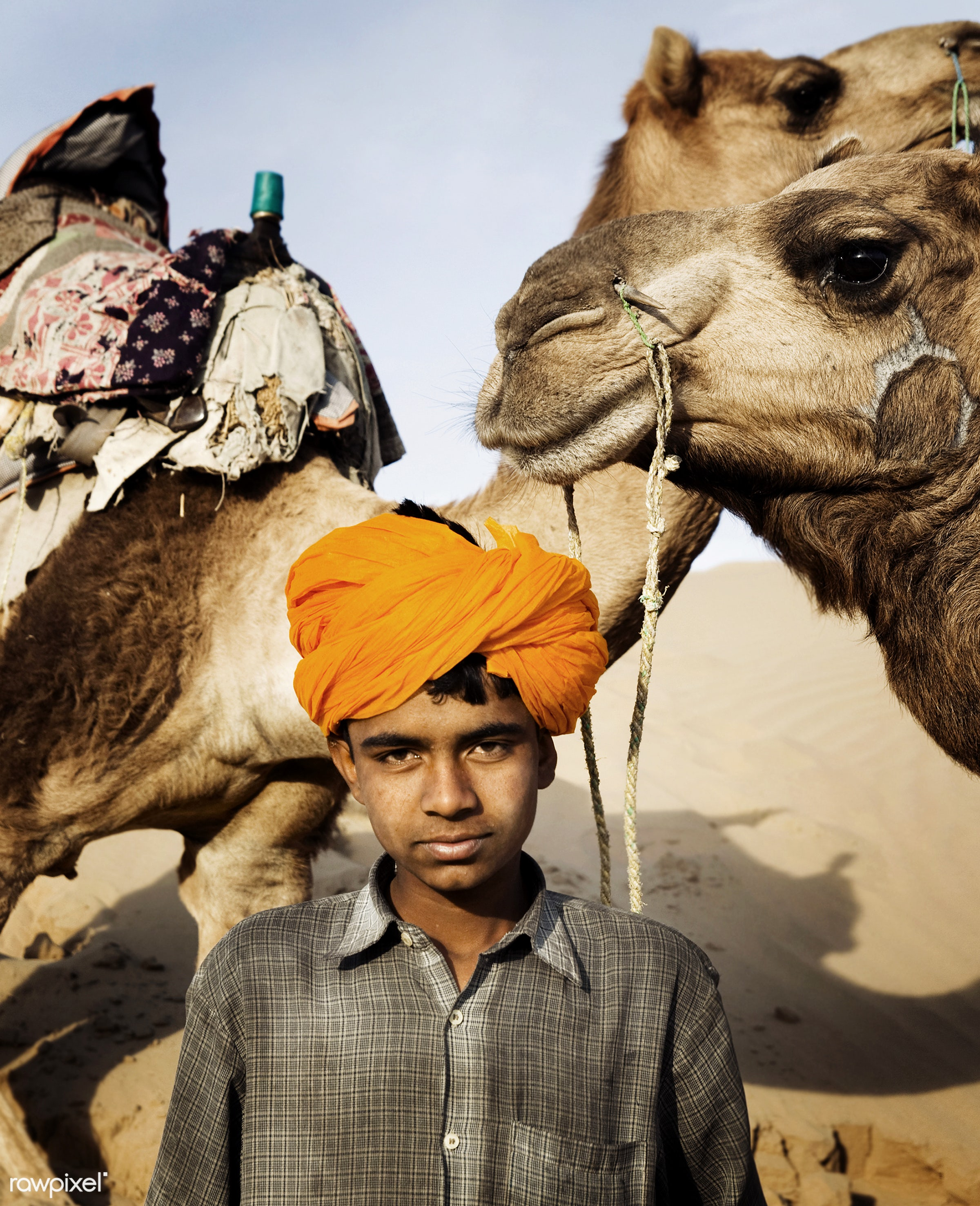 Indian boy with his camels - animal, asia, asian, boy, camel, countenance, desert, destination, expression, facial...