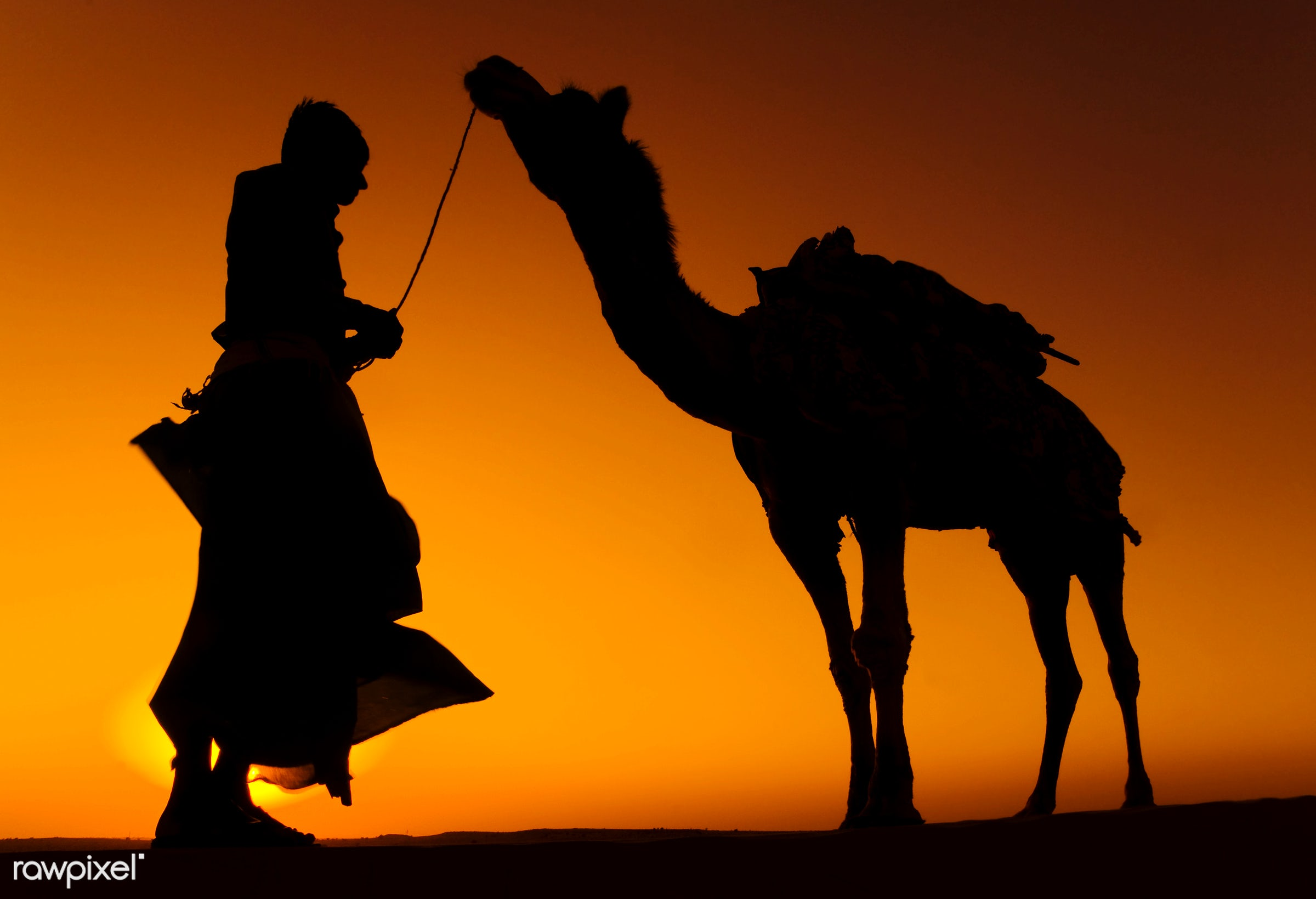 Indigenous Indian man with his camel. - animal themes, asia, camel, culture, desert, dusk, exoticism, friendship, heat,...