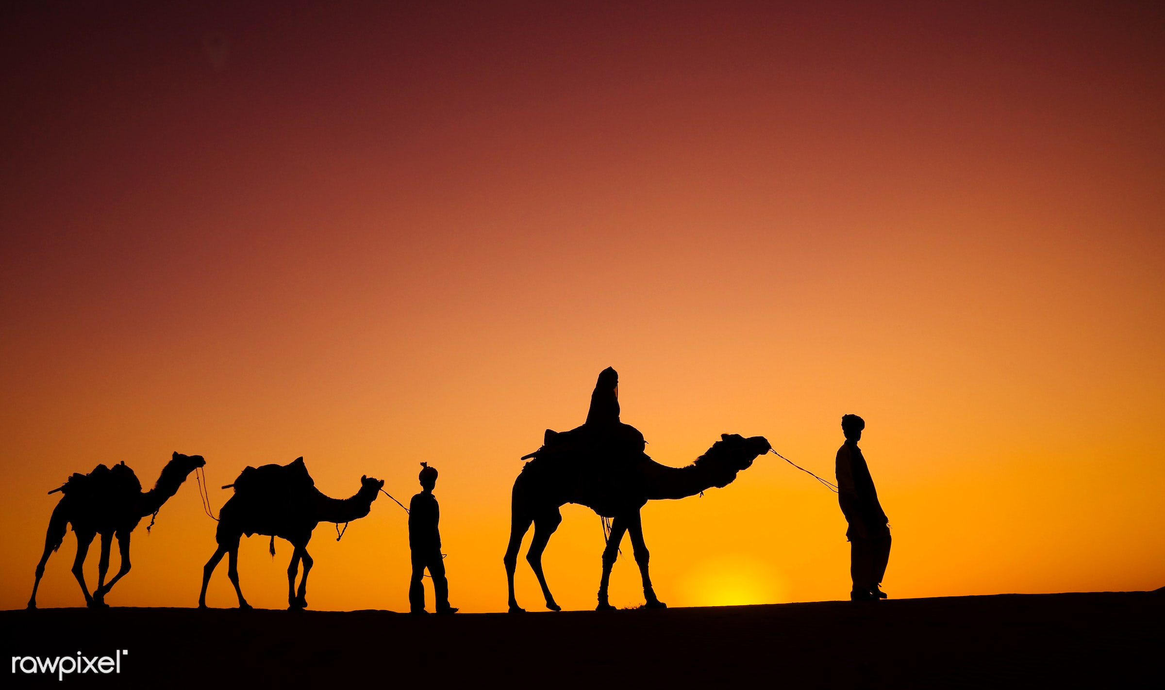 Indian men walking through the desert with their camels - animal themes, asia, camel, culture, desert, dusk, exoticism, heat...