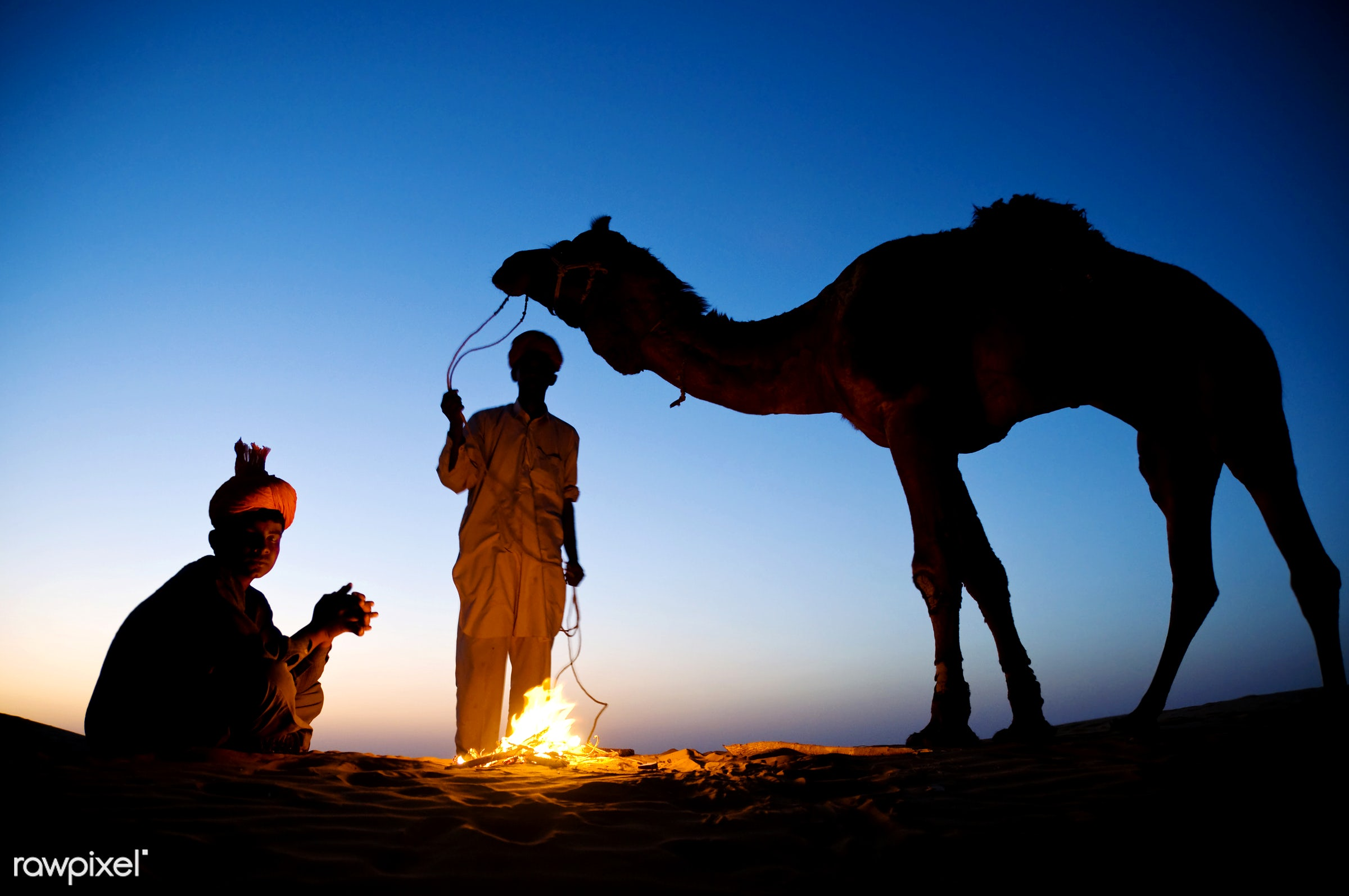 Indian men resting by the bonfire with their camel - animal themes, asia, bon fire, break, camel, culture, desert, dusk,...