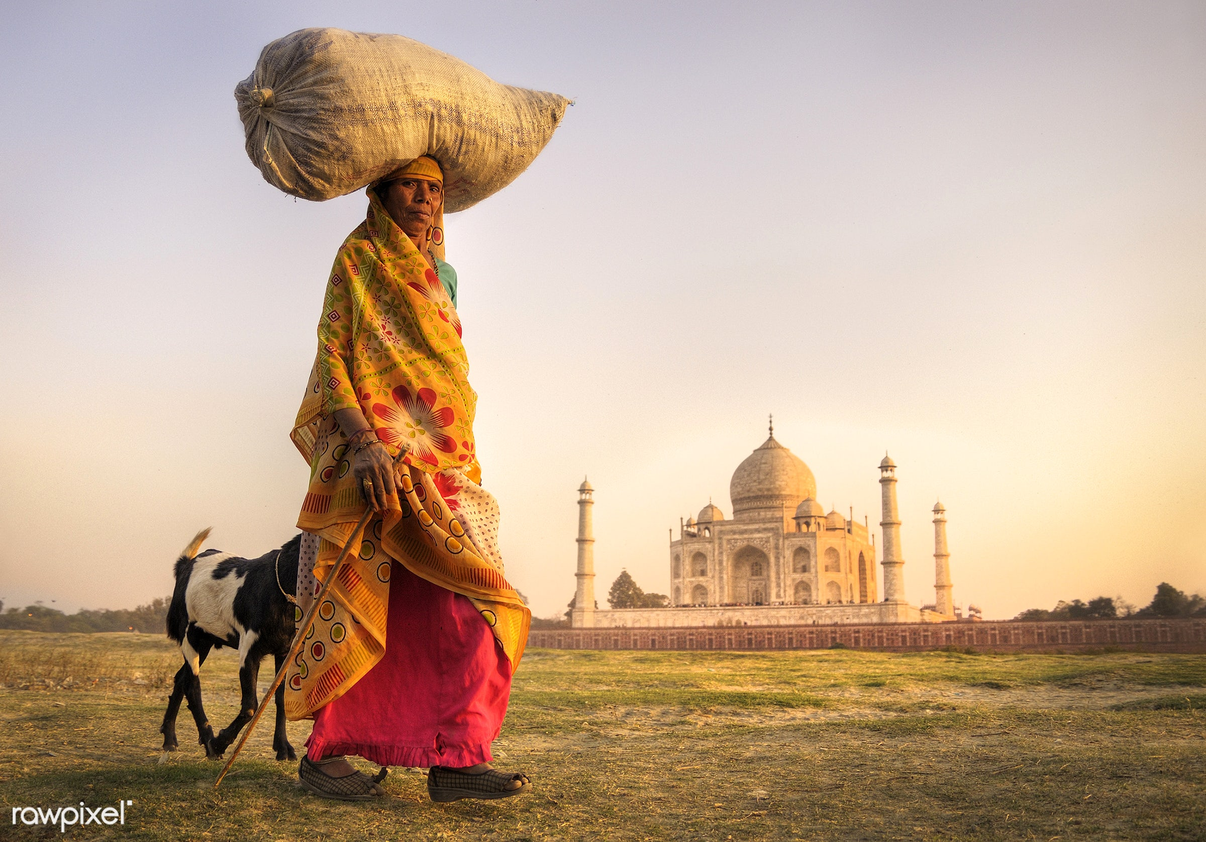 Indian woman and goat near the taj mahal - agra, agriculture, asia, asian culture, asian ethnicity, carry, carrying,...