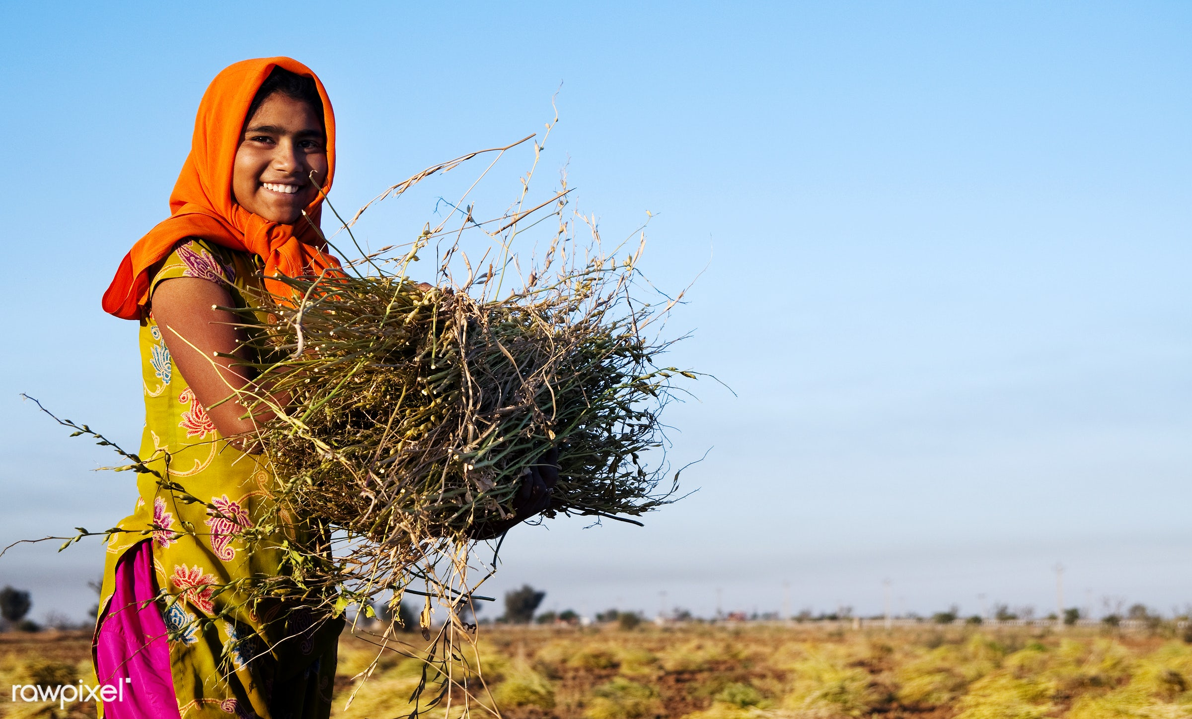 Indian girl working on a farm near Jaipur, India - agra, agriculture, asia, asian culture, asian ethnicity, carrying,...