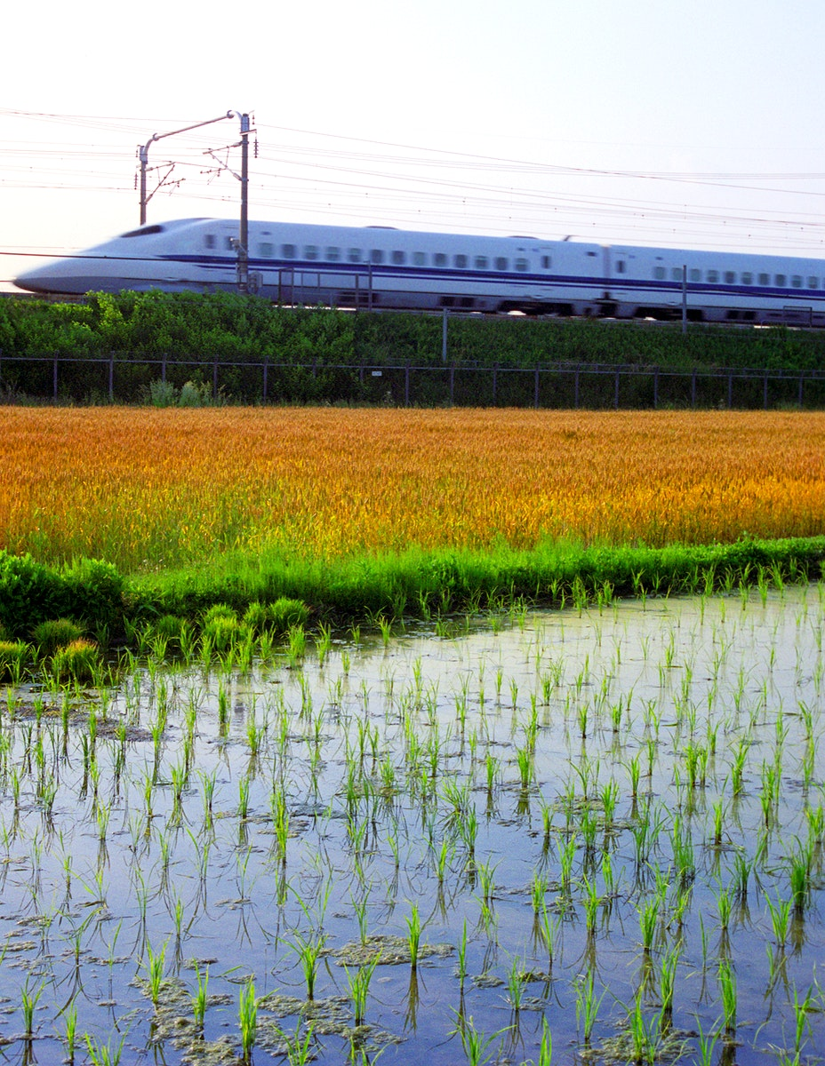 Bullet train passing by a rice paddy in Japan