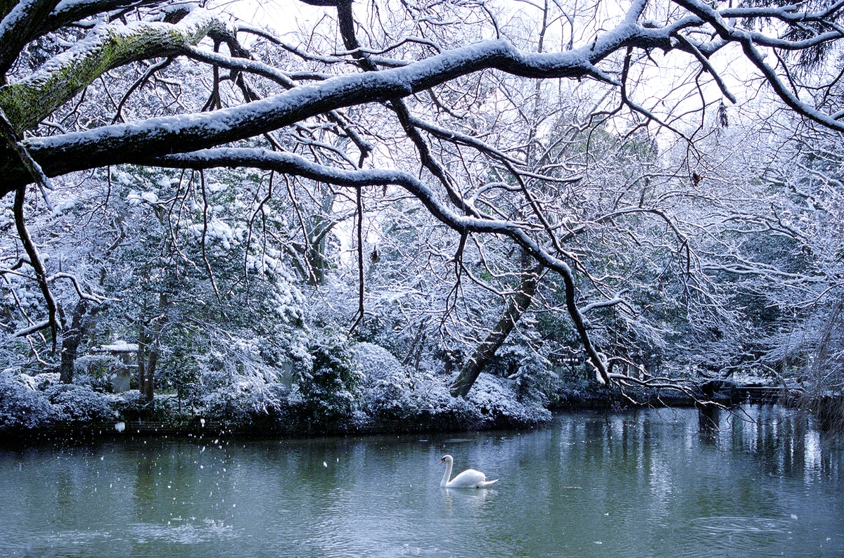 Winter snowfall in Japan