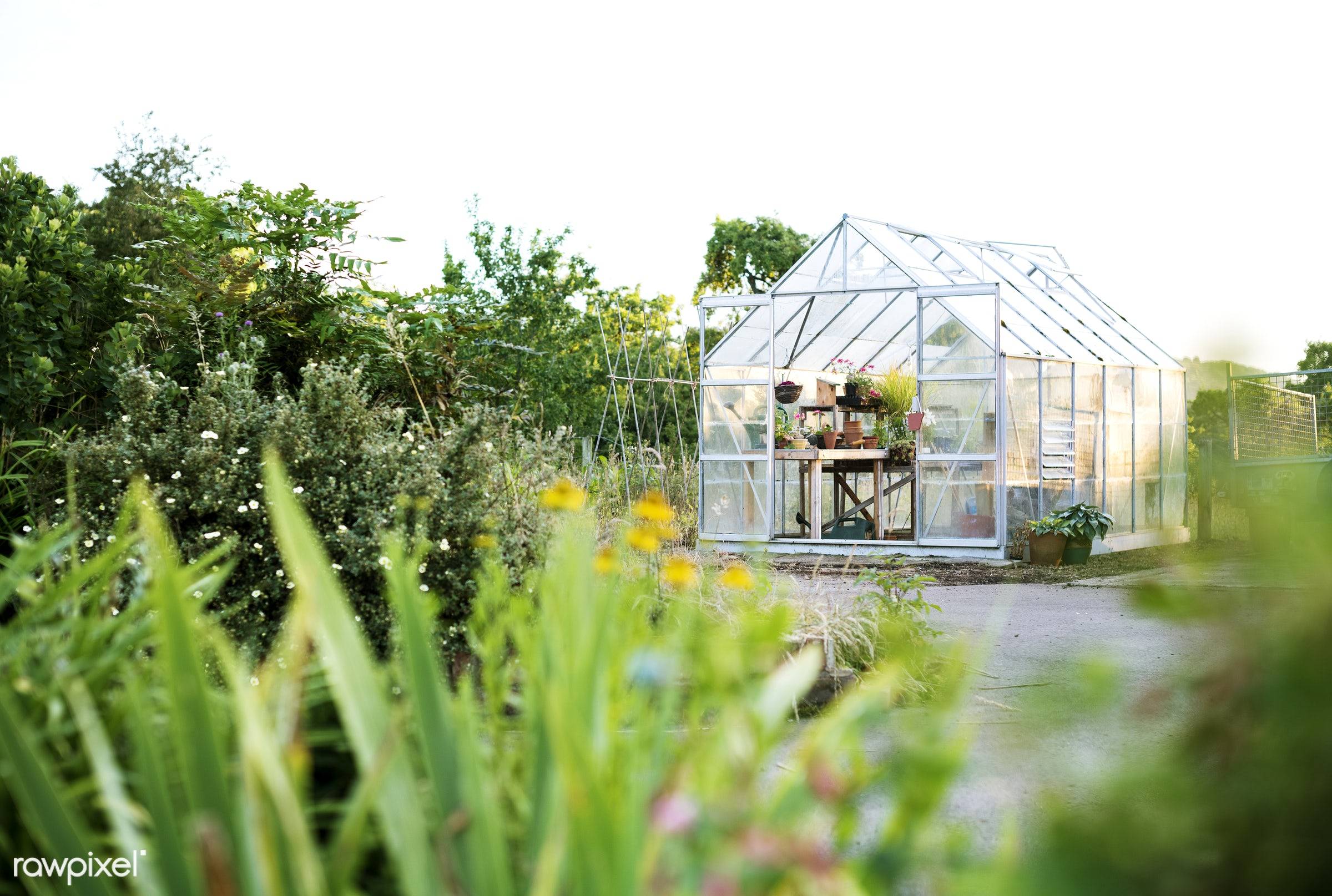 Glass greenhouse - agriculture, backyard, bloom, botanical, botany, building, cares, countryside, cultivate, cultivating,...