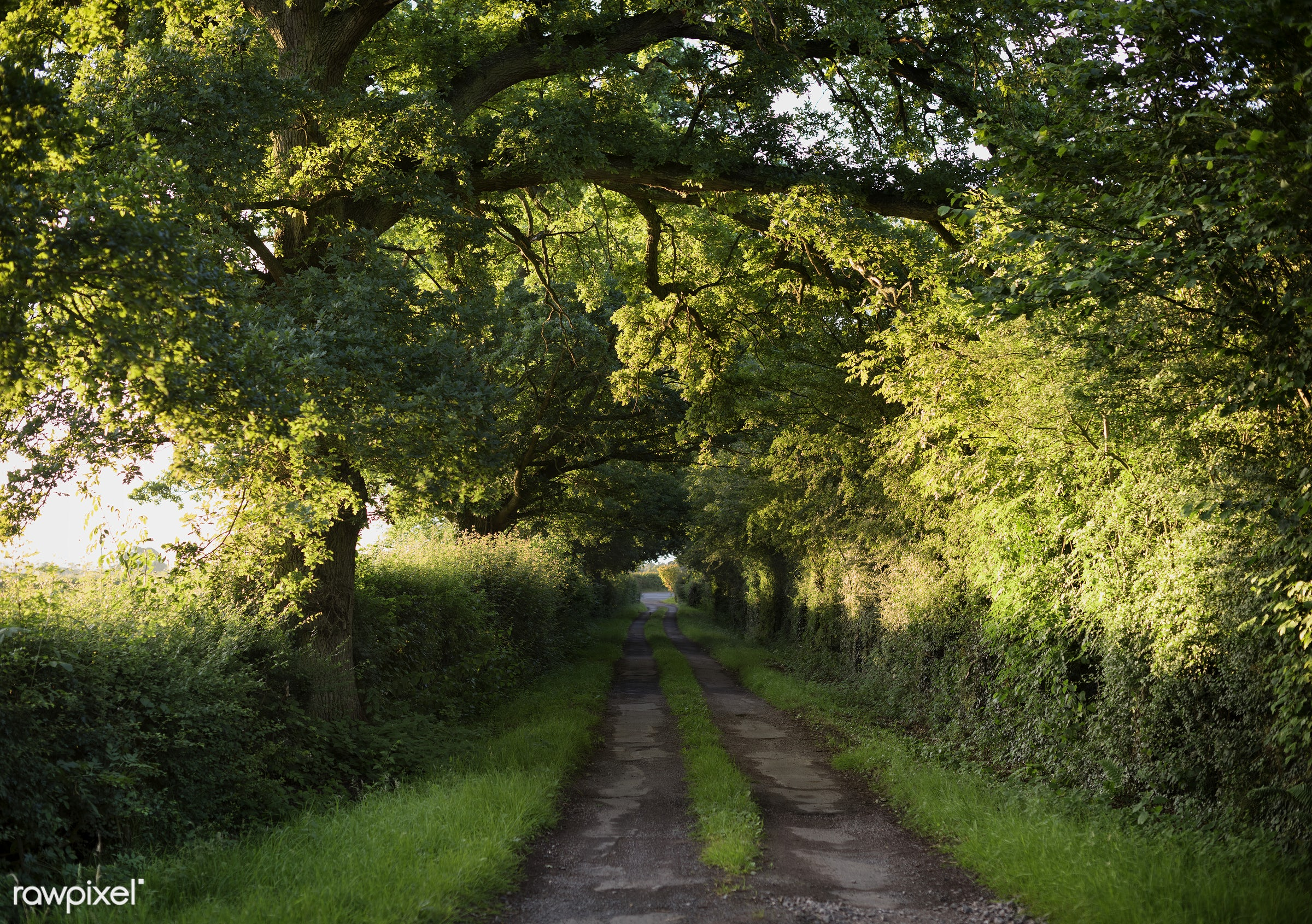 Nature pathway - bush, country road, countryside, environment, footpath, freshness, green, landscape, lane, mystery, nobody...
