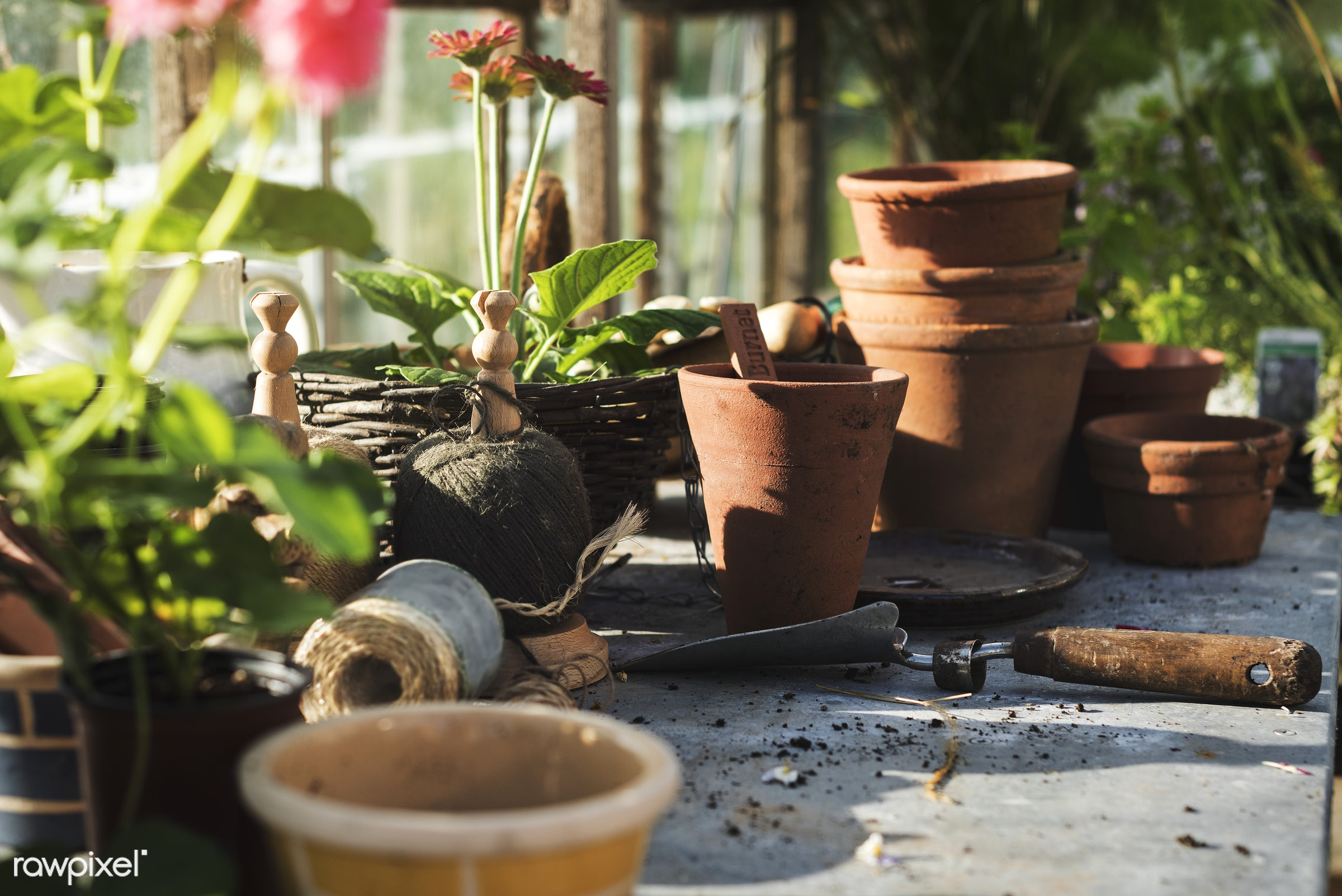 Flowers pots in glass greenhouse - agriculture, backyard, bloom, botanical, botany, building, cares, countryside, cultivate...