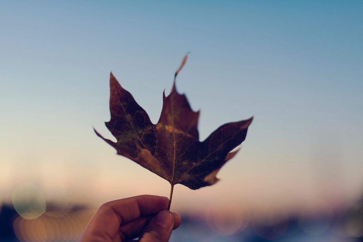 Autumn leaf and the blue sky