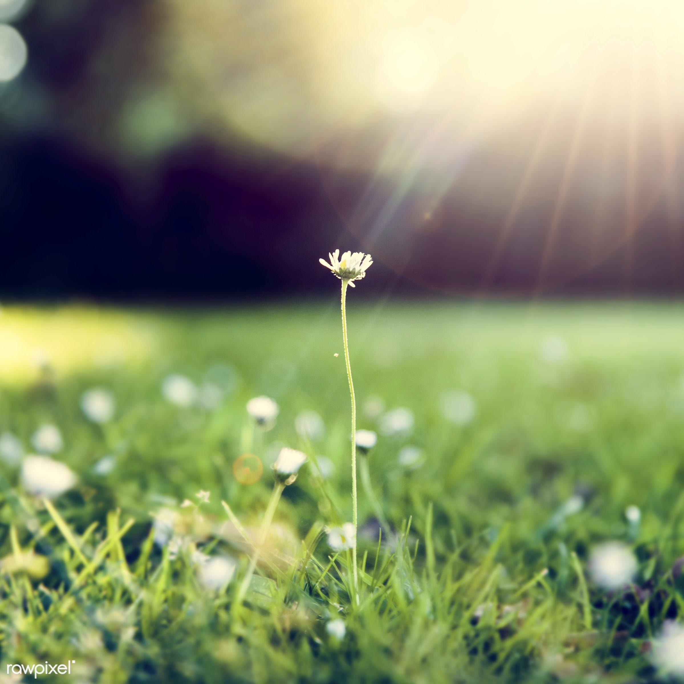attractive, beautiful, carefree, environment, flower, focus, fresh, freshness, fun, garden, grass, grassland, green, leisure...