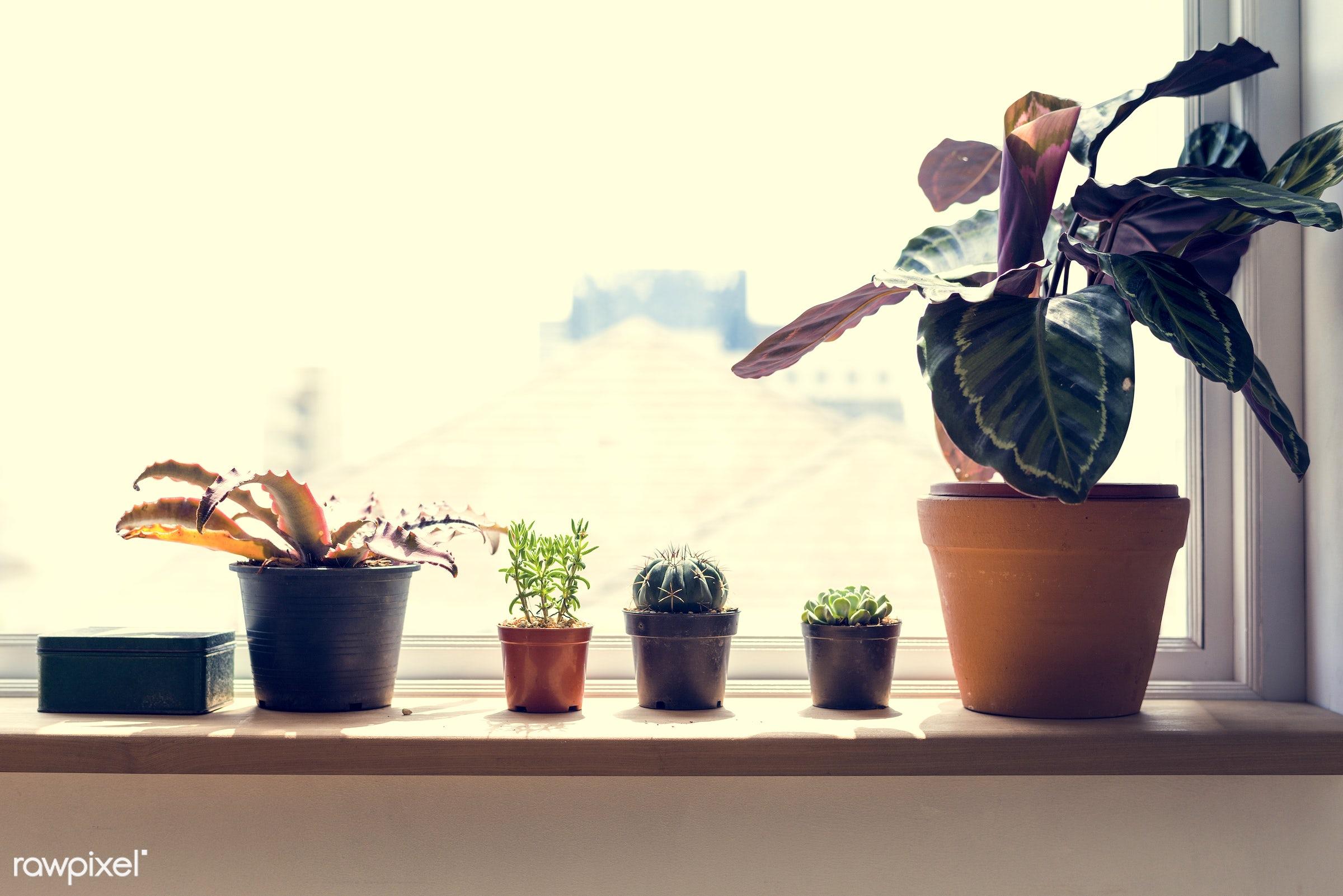 plant, succulent, nobody, home, botany, botanic, space, pot, drought, nature, fresh, flower, desert, dry, decoration, green...