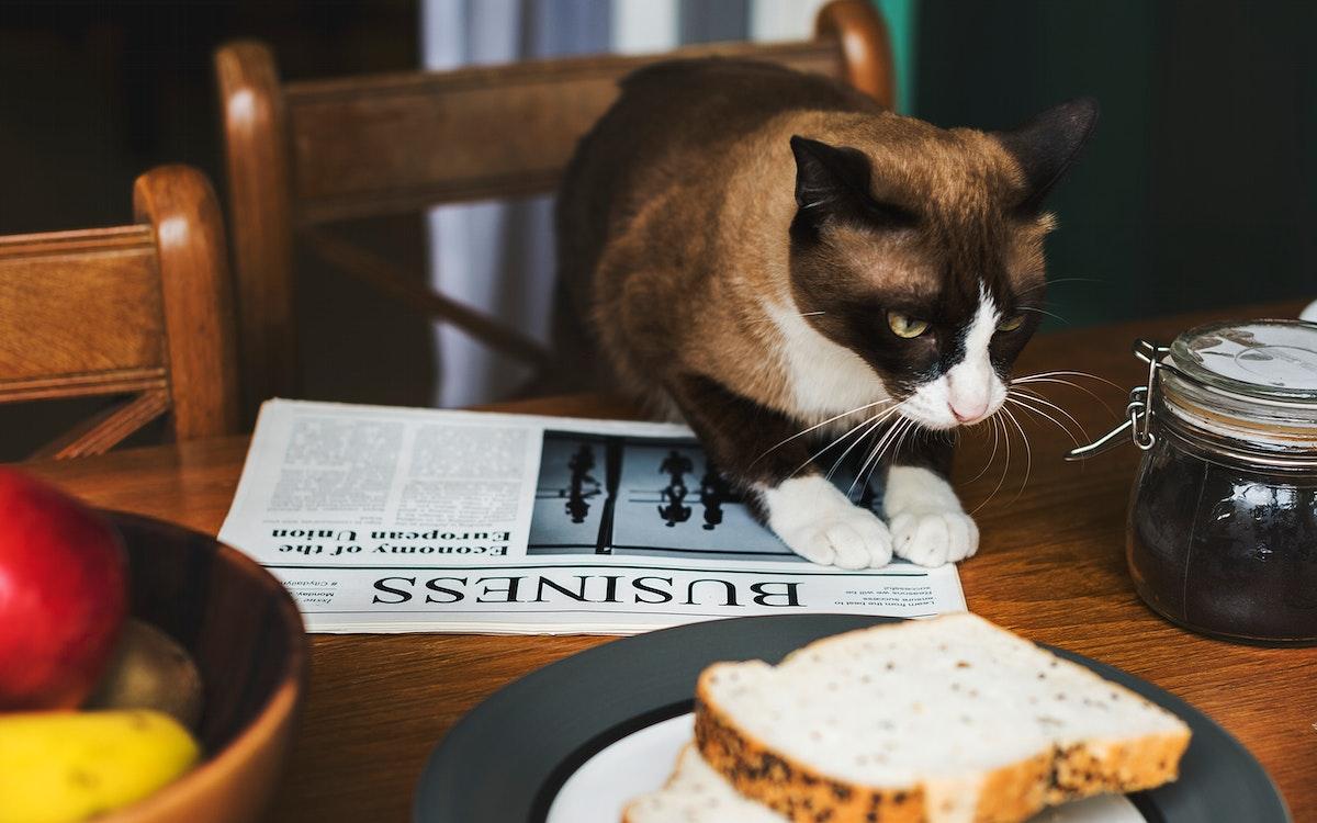 Eatery Breakfast Morning Meal Cat