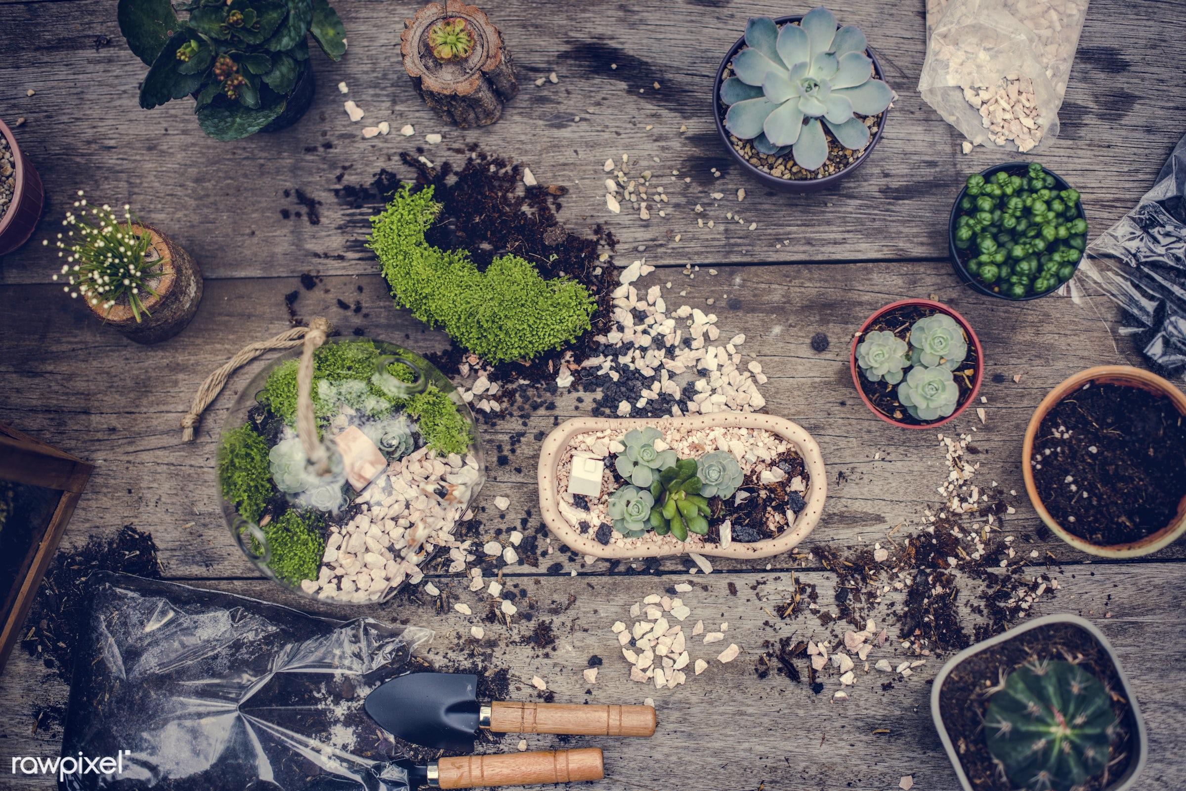 plant, succulent, decorative, handicraft, tropical, moss, terrarium, botanical, miniature, decor, nature, composition, glass...
