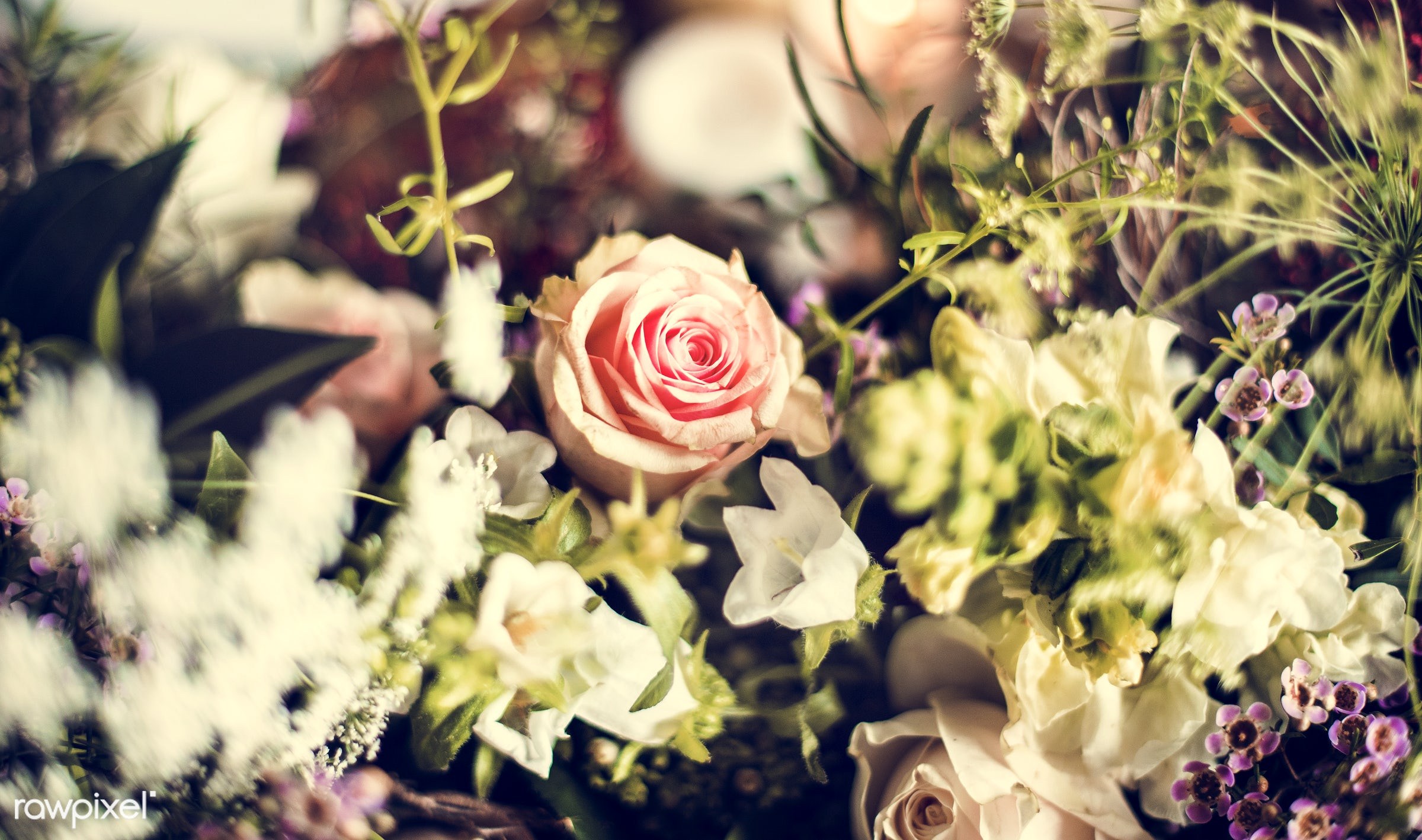 plant, colorful, beauty, spring, blossom, spring flower, nature, fresh, cheerful, flower, vintage, romance, decoration,...