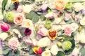 Fresh Variety Flowers Arrangement Decorative as Background