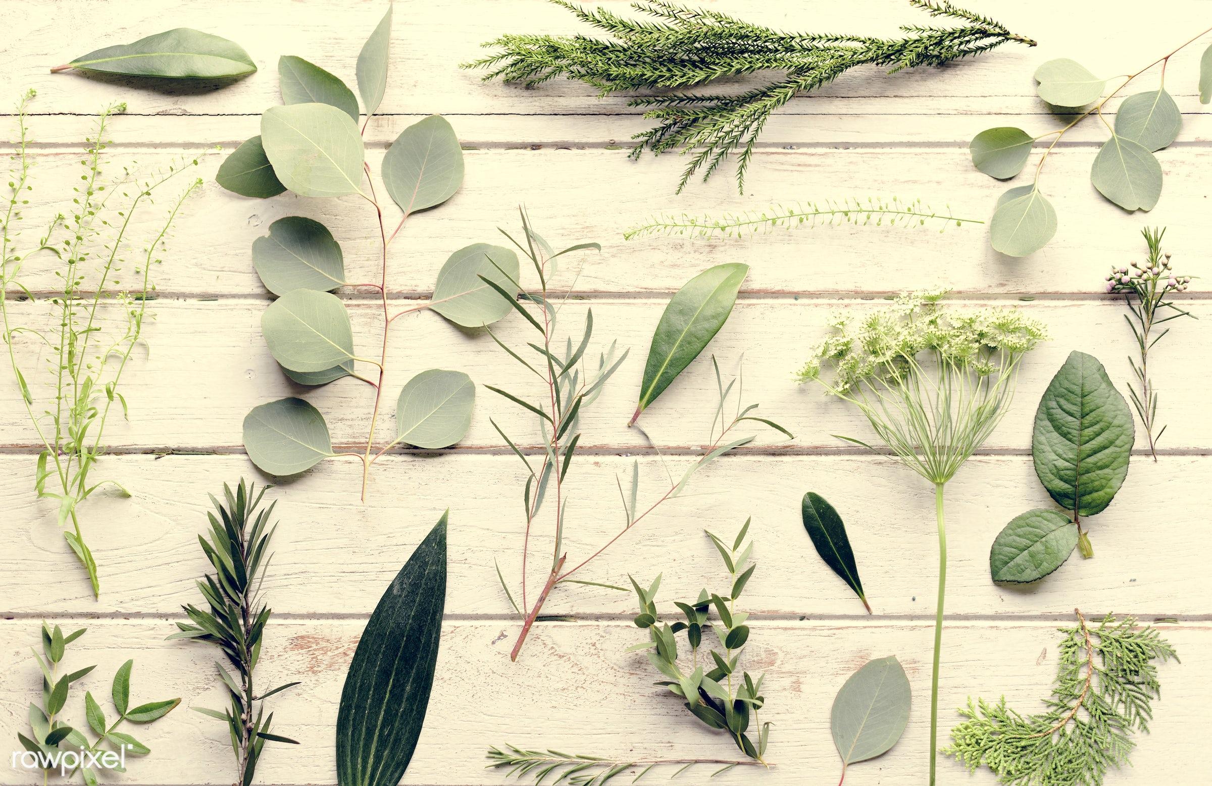 plant, nobody, detail, wood, diverse, set, plants, beauty, collection, leaf, leaves, plantation, tree, nature, fresh,...