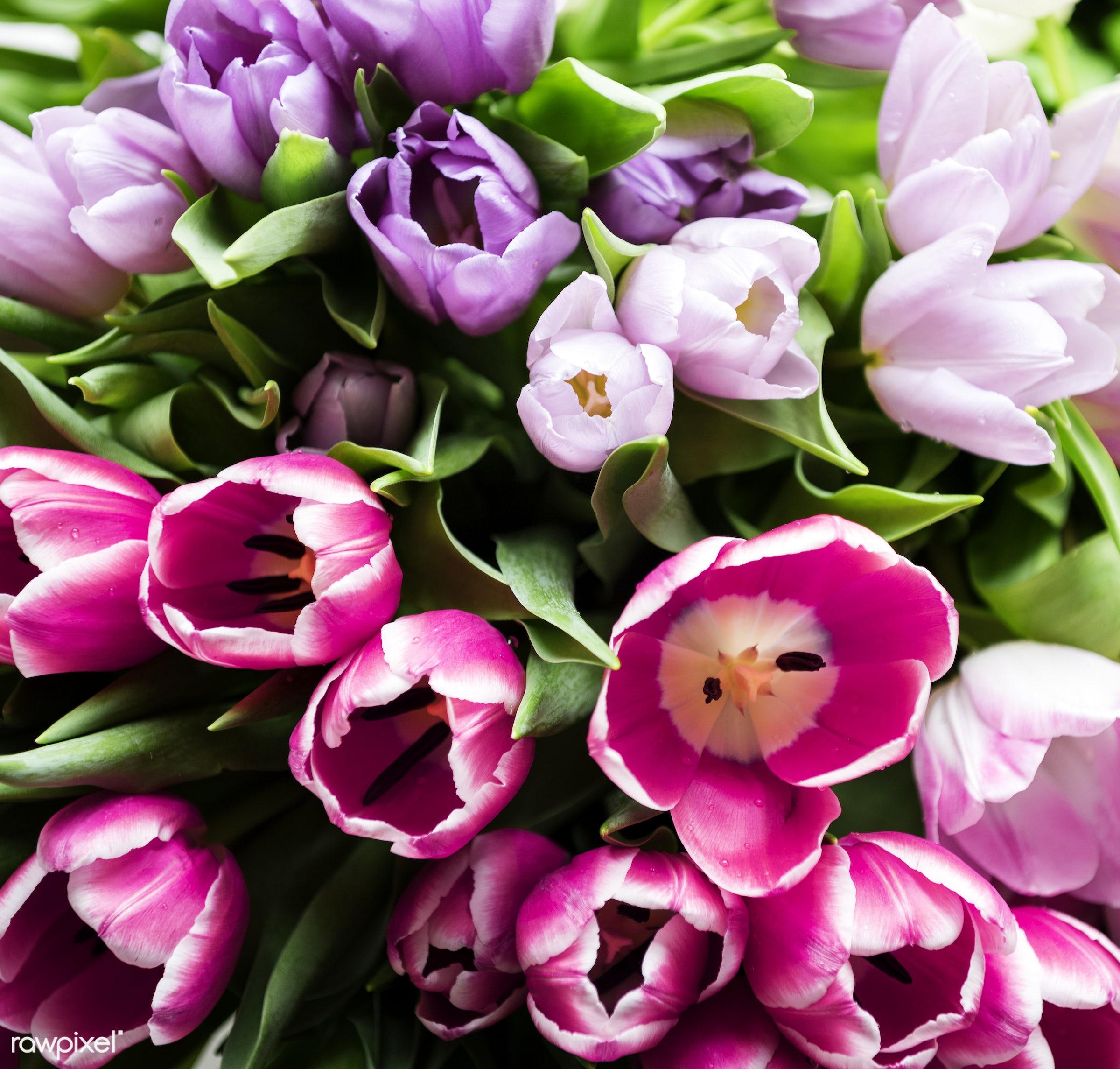 festive, nobody, detail, decorative, diverse, colorful, events, plants, leaf, tulips, leaves, spring, blossom, decor, nature...
