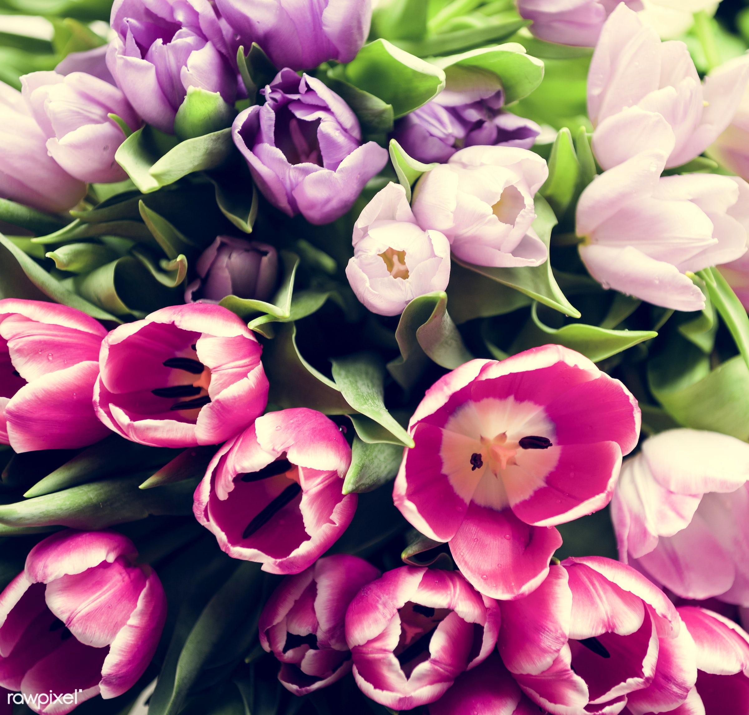 nobody, festive, detail, decorative, diverse, colorful, events, plants, tulips, leaf, leaves, spring, blossom, decor, nature...