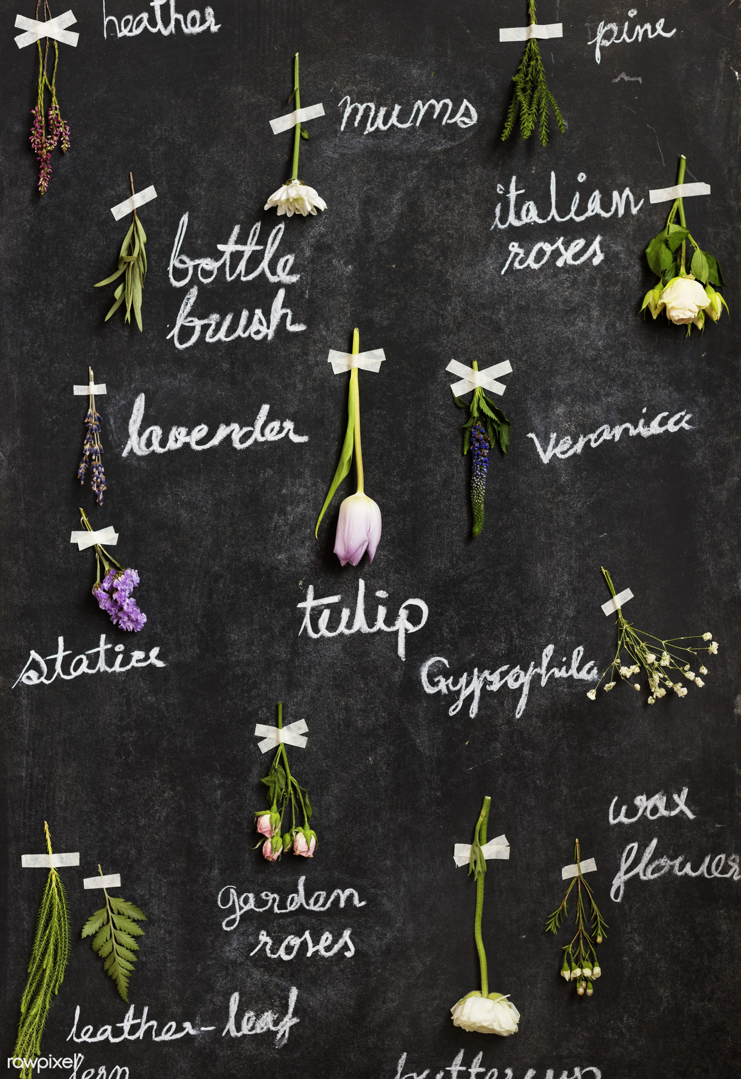 Labeled dried flowers on blackboard - hanging, flowers, dried, real, natural, leaves, nature, label, name, information, data...