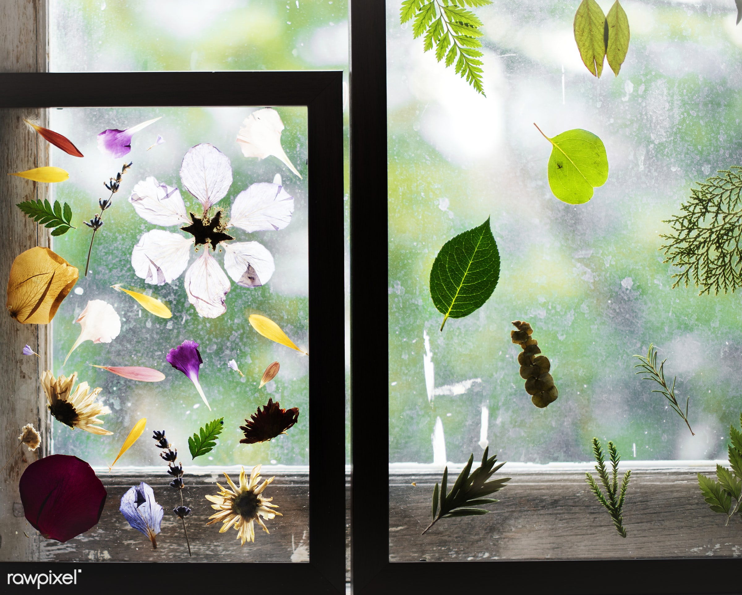 Pressed flowers on glass - art, collection, craft, decoration, flattened, flowers, frame, glass, handmade, hobby, leaves,...