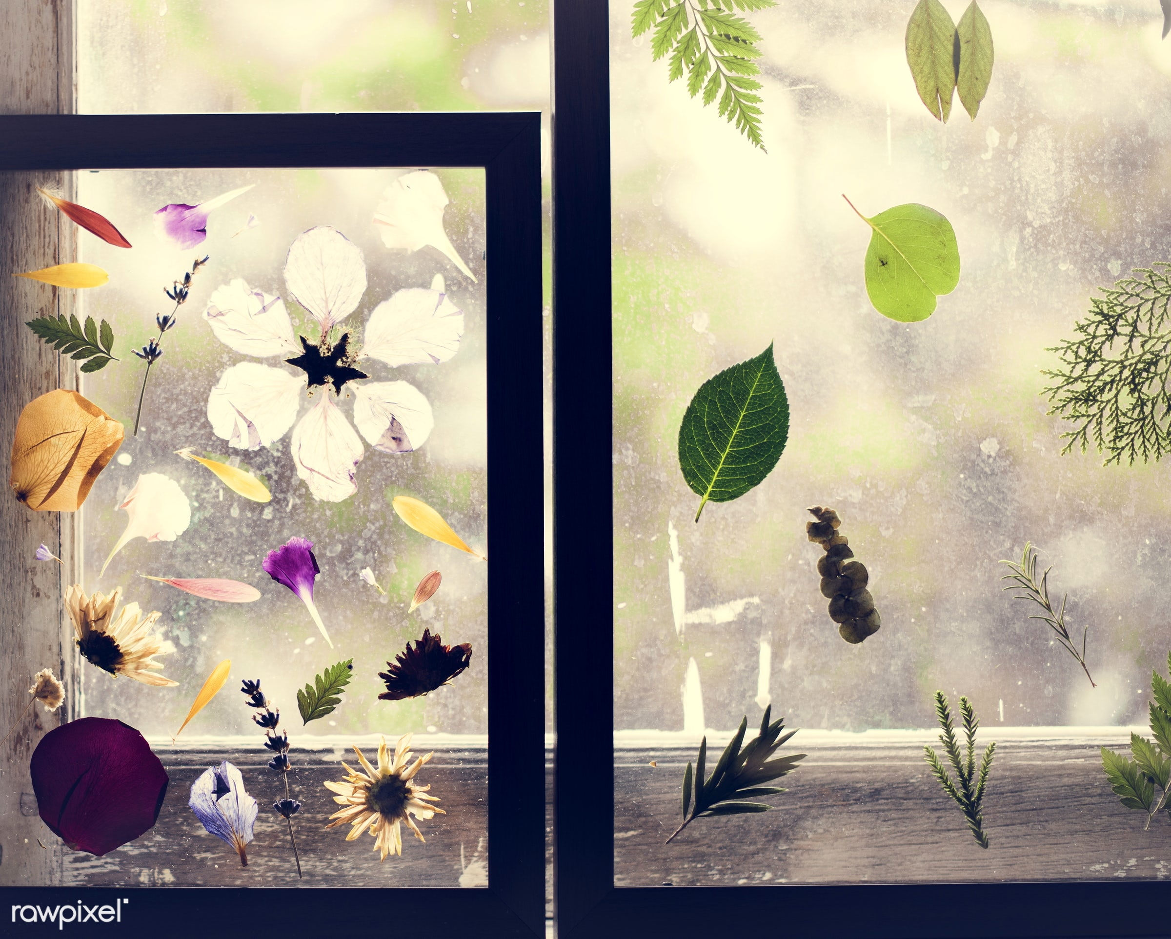 plant, bouquet, decorative, leaf, type, kind, blossom, decor, fresh, foliage, pressed flower, transparently, flowers,...