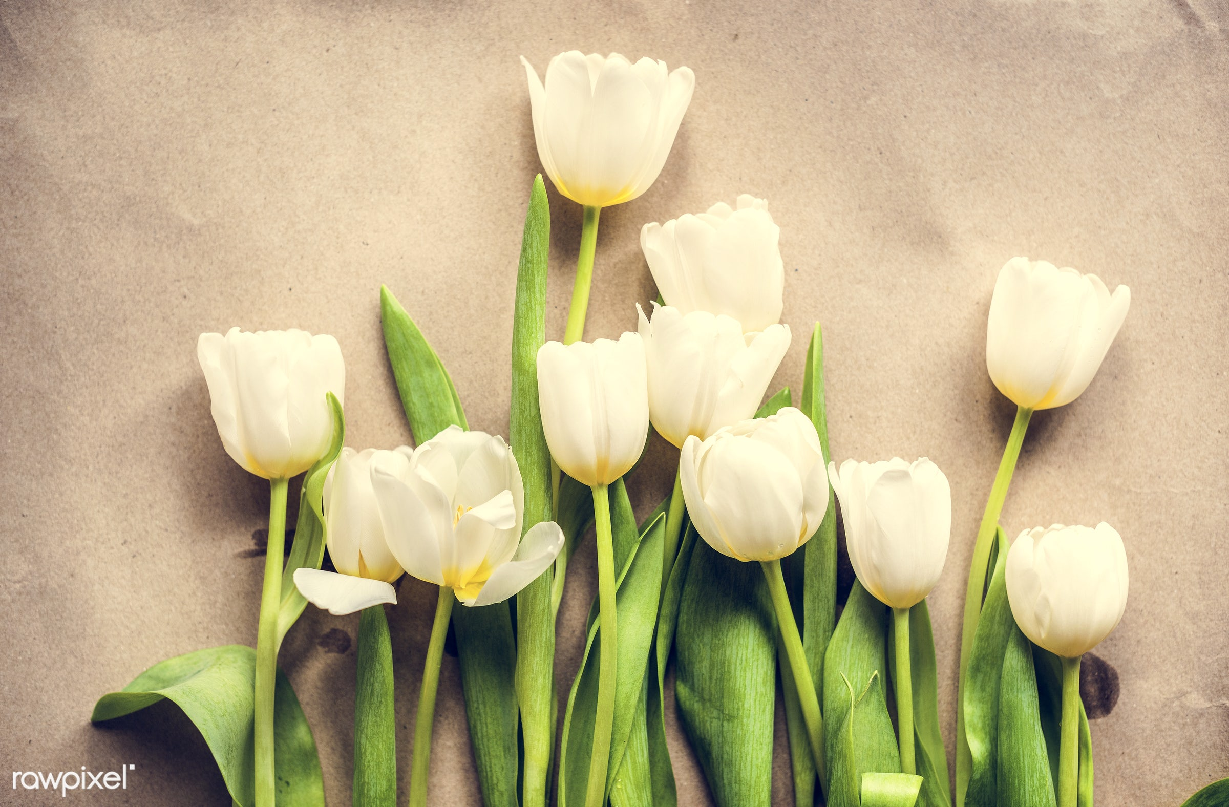 nobody, bouquet, festive, detail, decorative, colorful, paper, events, plants, tulips, leaf, leaves, blossom, craft paper,...