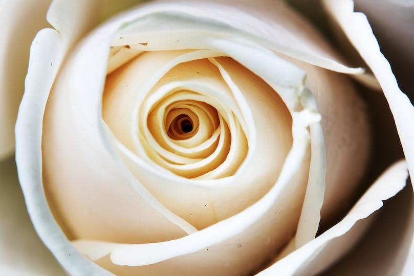 Close Up Fresh Rose Flowers Arrangement Decorative