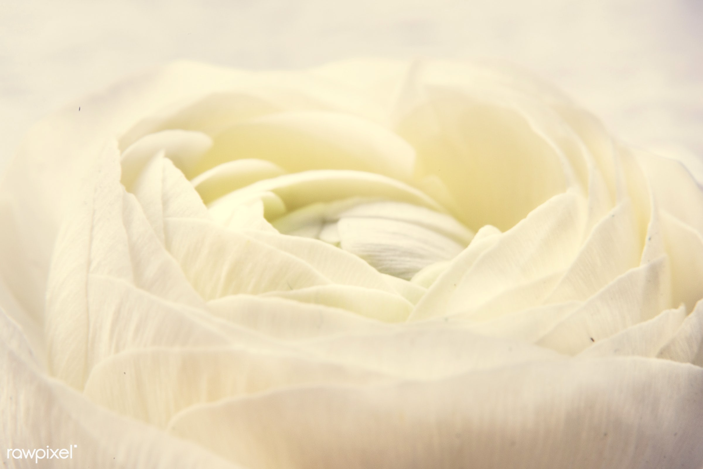 bouquet, nobody, detail, leaf, leaves, love, nature, flowers, cheerful, flower, refreshment, white, present, rose,...
