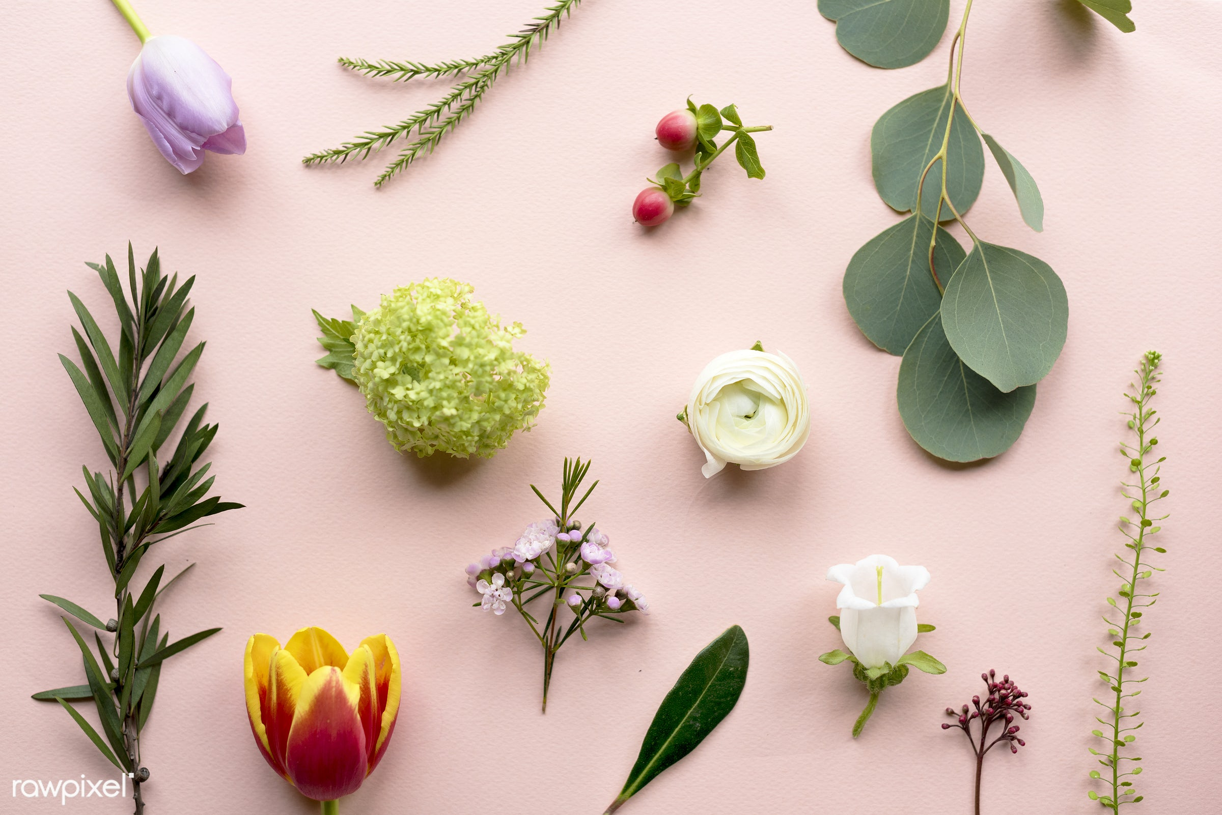 Various kinds of flowers on pink background - aerial, background, flowers, fresh, natural, real, table, texture, variety,...
