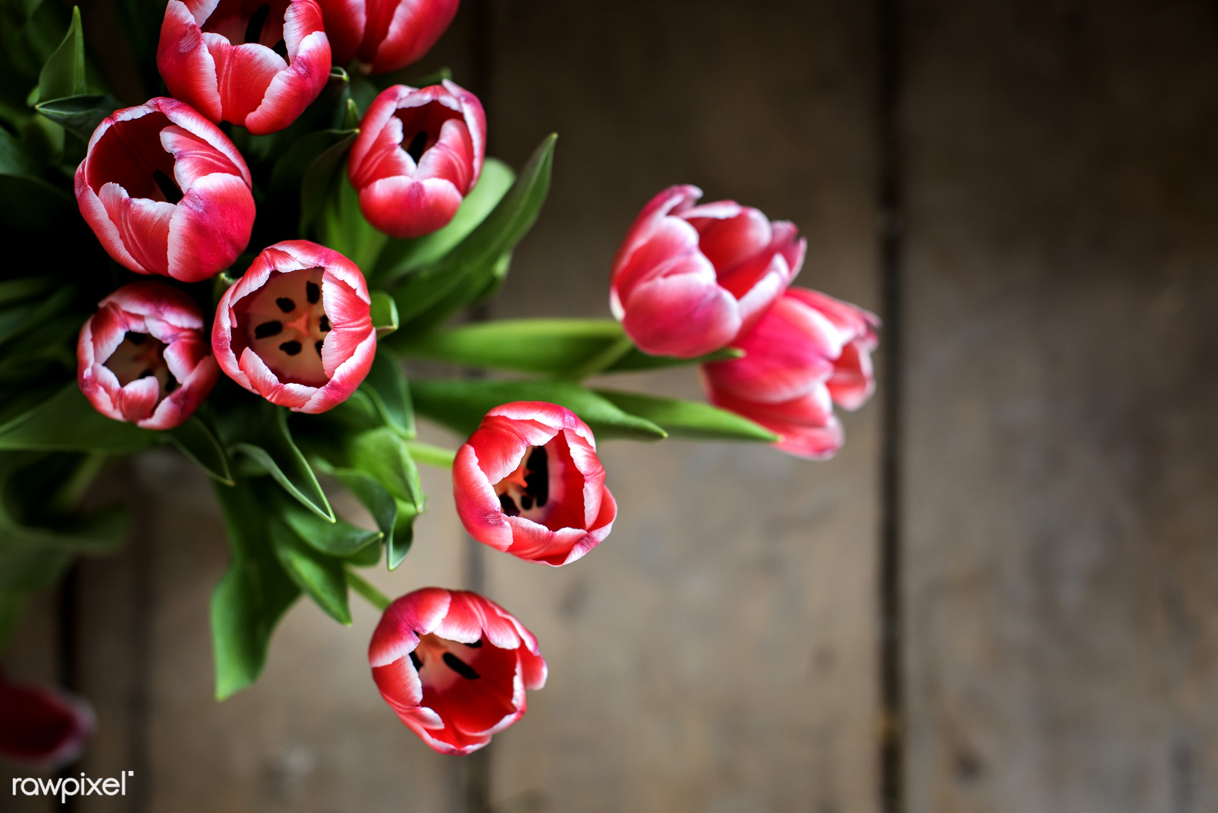 Fresh bouquet of pink tulips - aerial view, arrangement, beautiful, blooming, blossom, bouquet, bunch, decoration,...