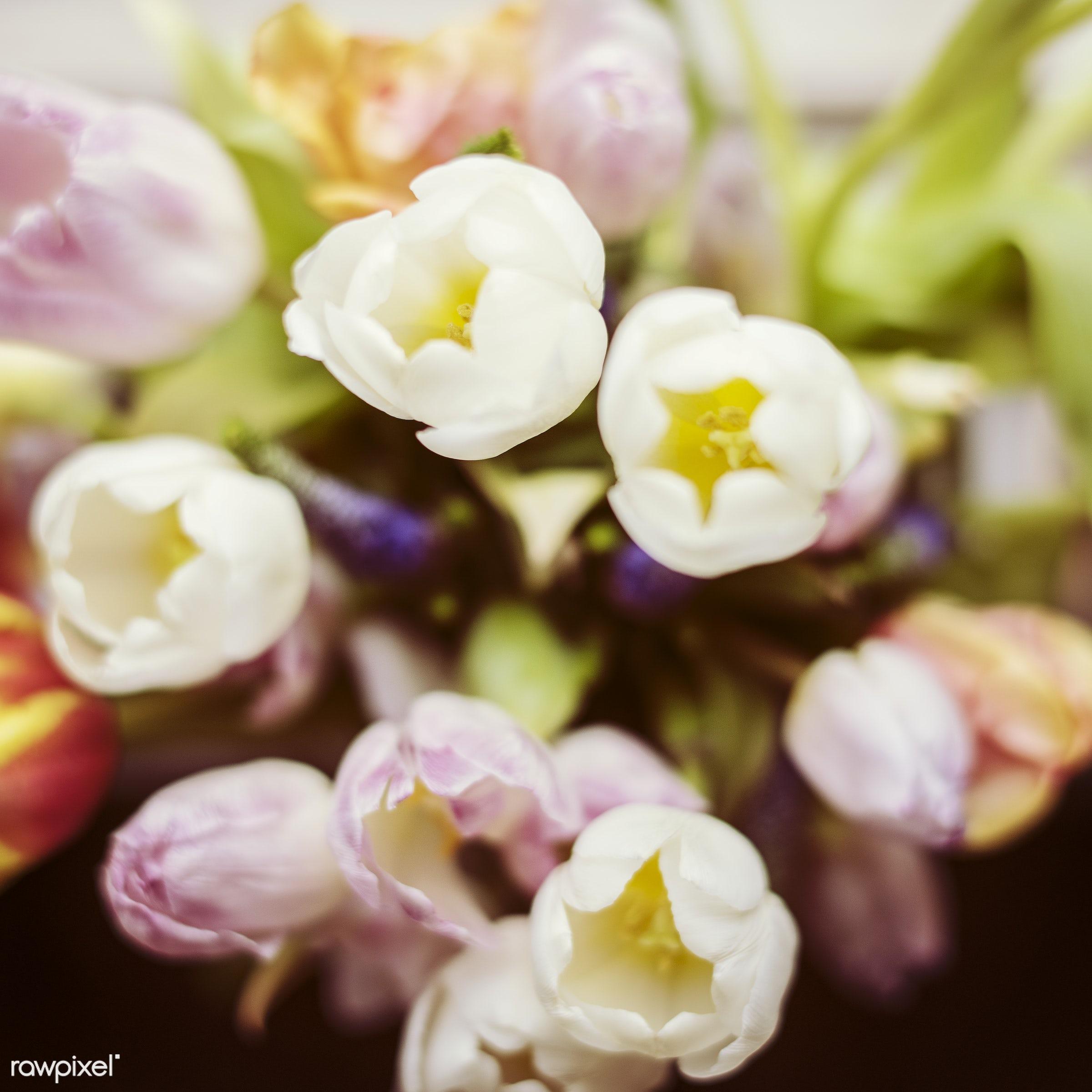 festive, nobody, detail, decorative, colorful, events, plants, tulips, spring, blossom, decor, nature, fresh, attractive,...