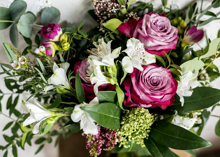 Flower blooming botany celebration romance