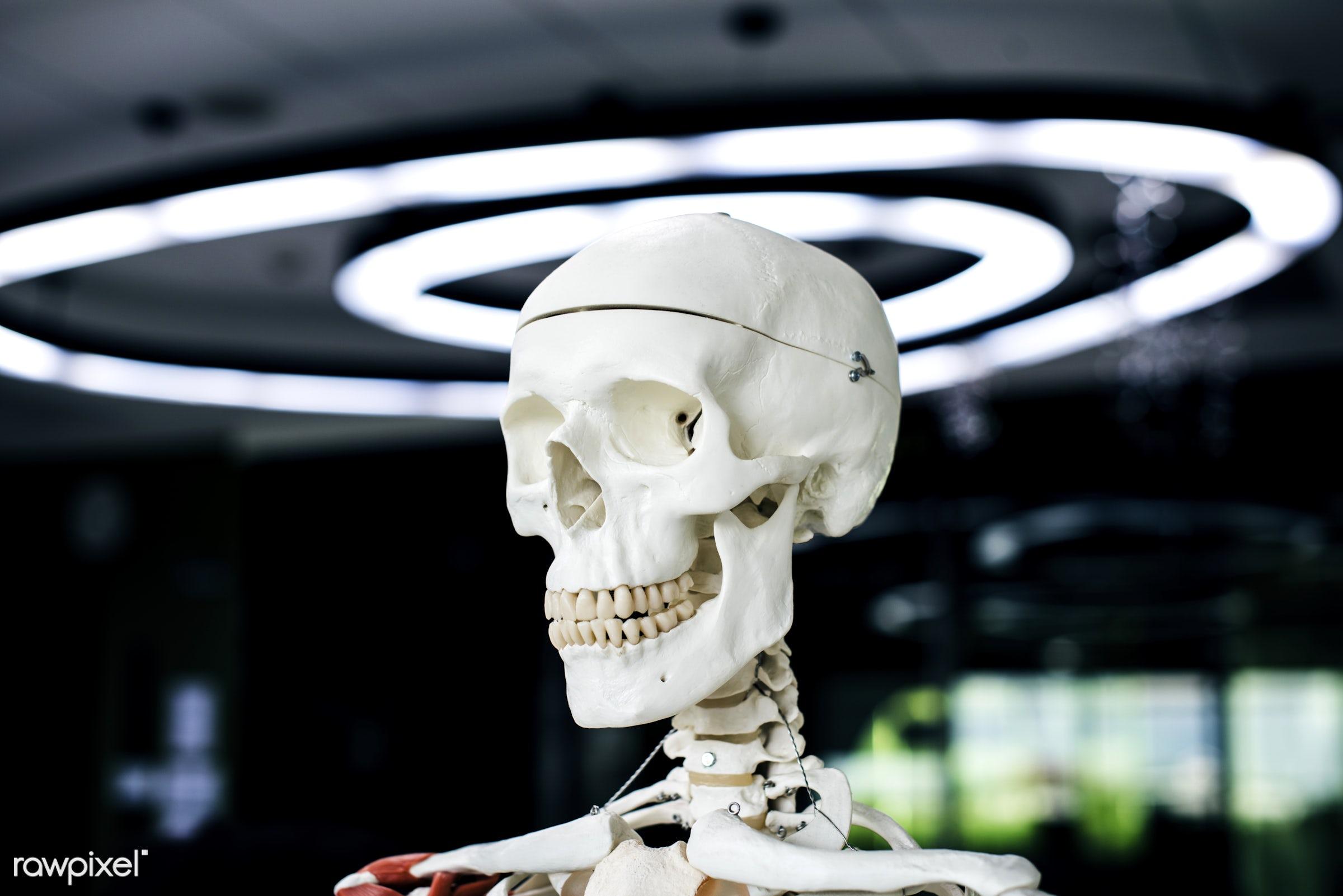nobody, body, structure, model, study, skeleton, object, science, human, skull, anatomy, bones, learn, learning, teenager,...